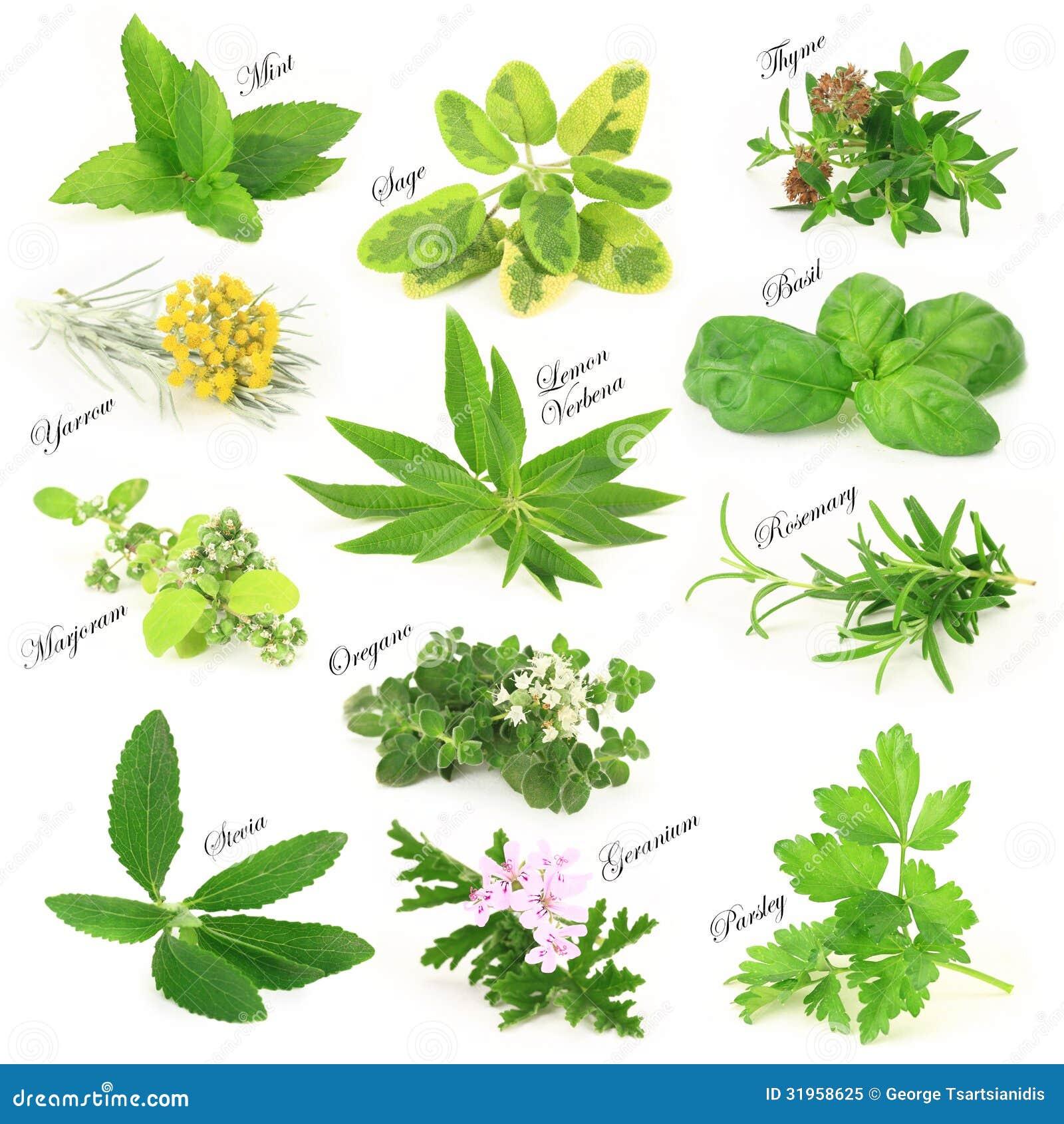 Hierbas arom ticas frescas for Plantas aromaticas para cocinar