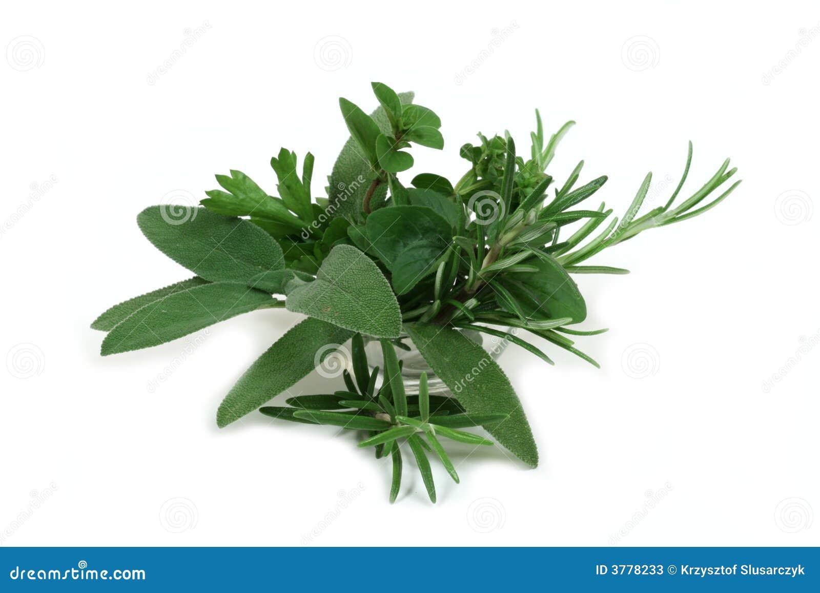 Hierbas arom ticas para cocinar fotos de archivo imagen for Plantas aromaticas para cocinar