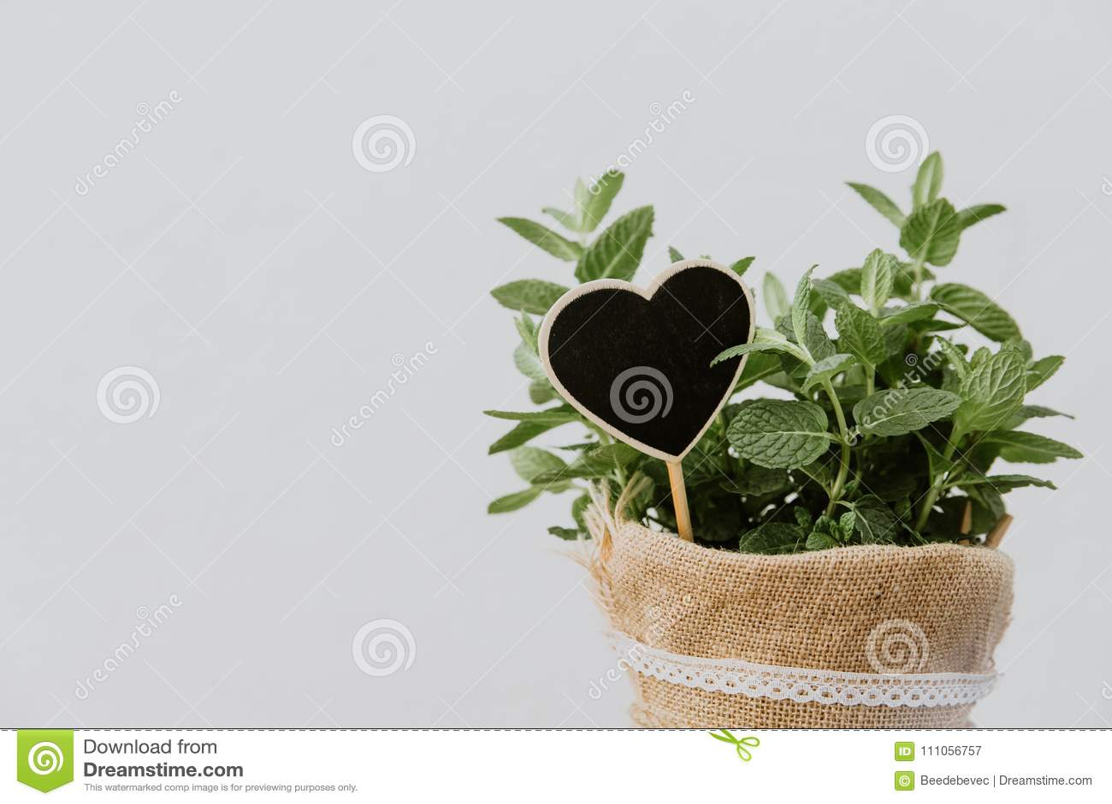 Hierbas de la planta de la menta en pote de la arpillera