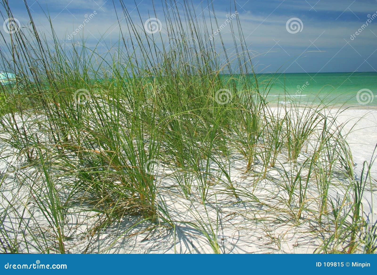 Hierbas de la playa