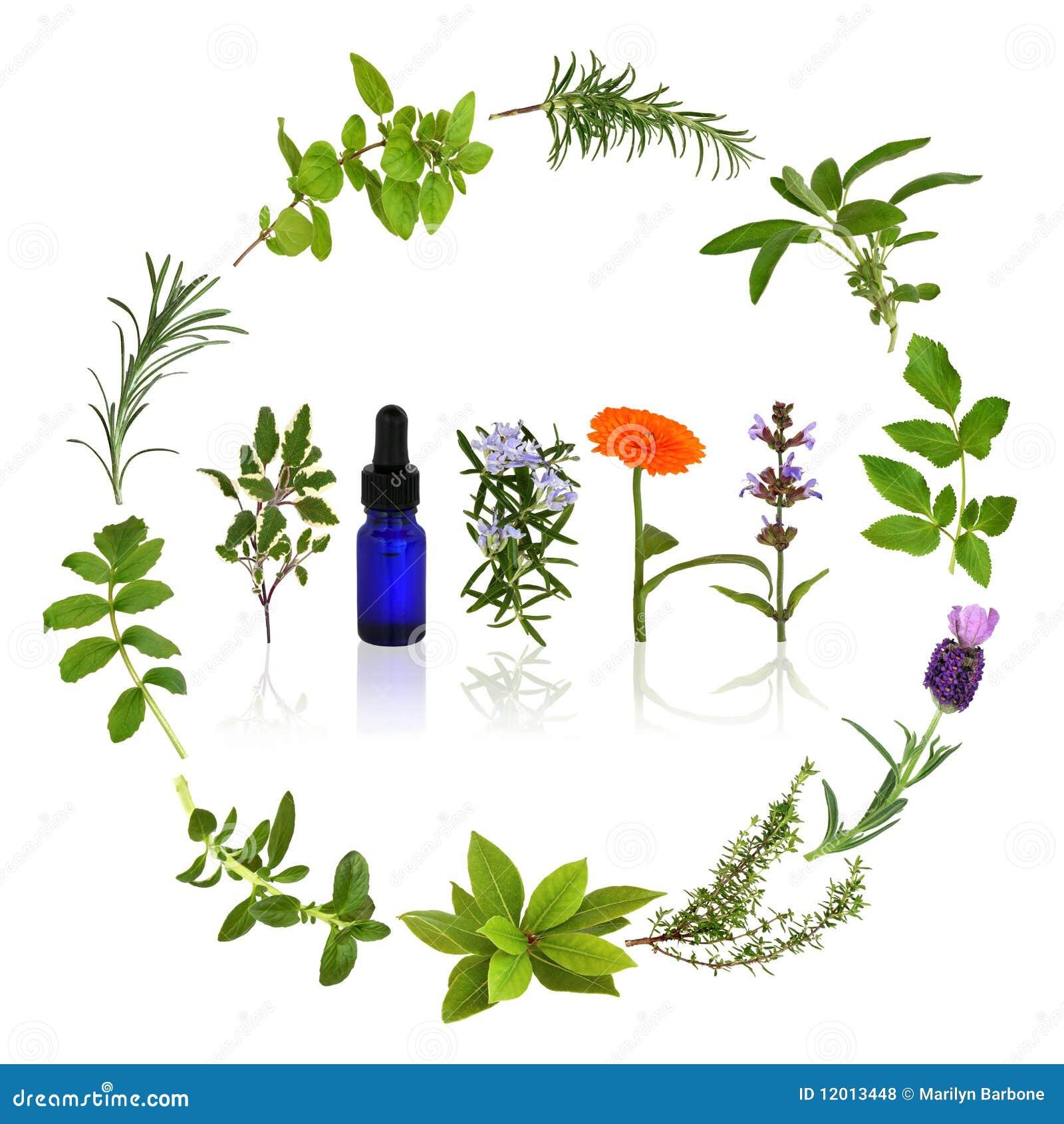 Hierbas medicinales y culinarias foto de archivo imagen - Marcos para plantas ...