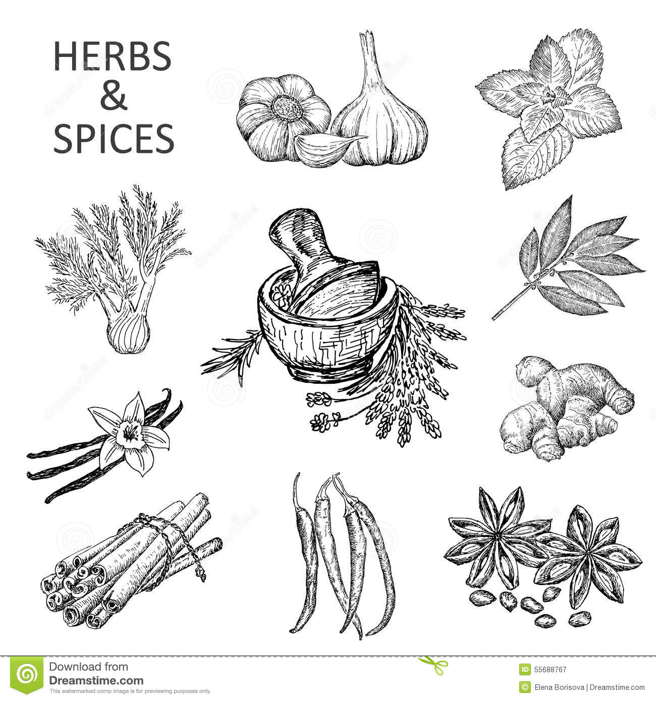 herbs coloring pages - photo#31