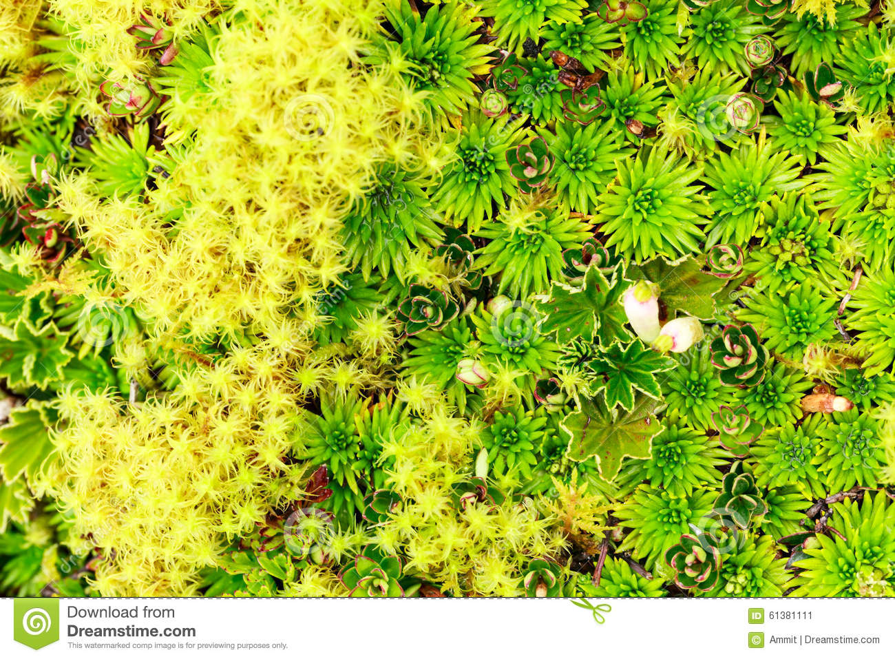 High Altitude Moss stock image  Image of design, horizontal - 61381111