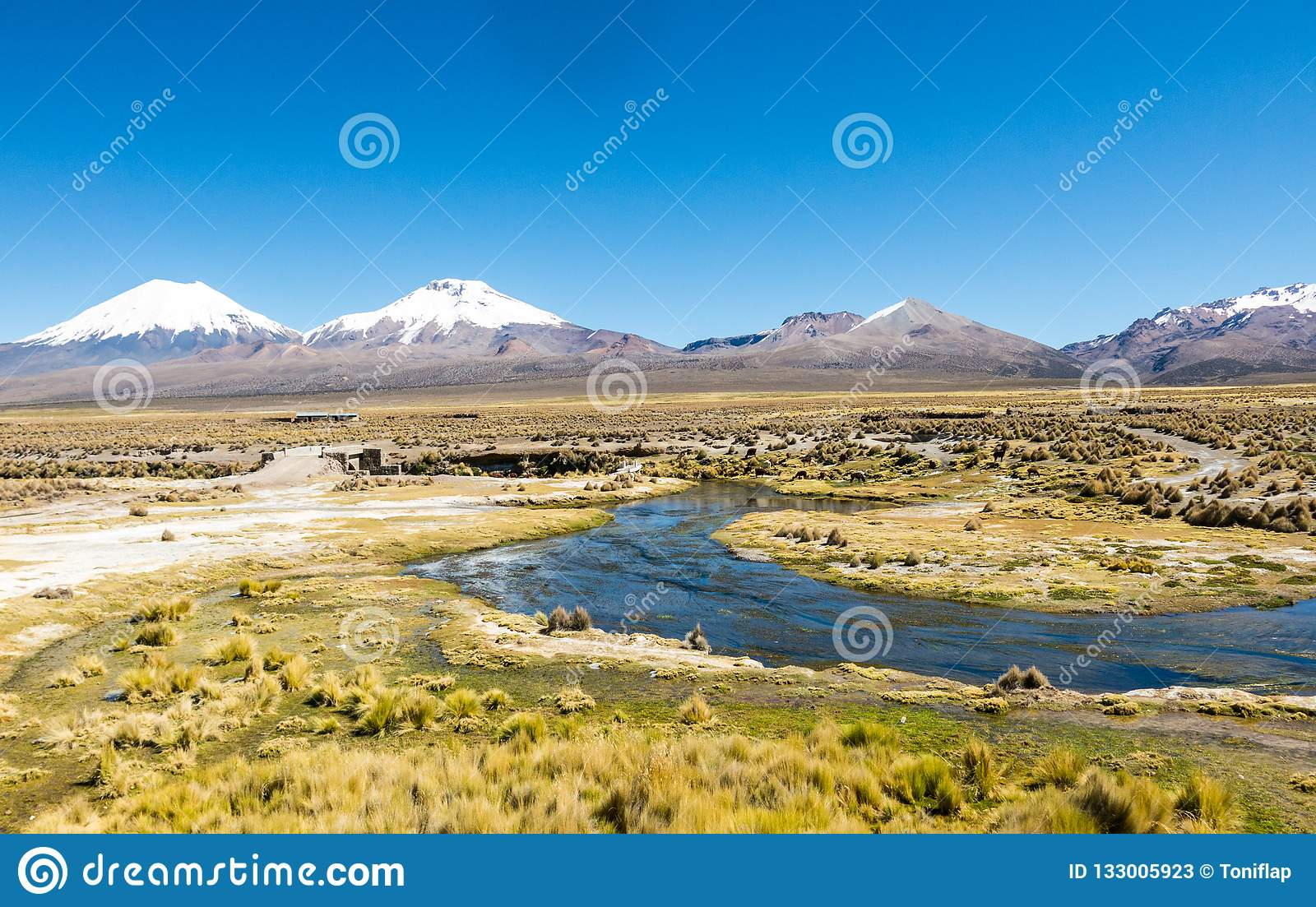 High Andean tundra landscape in the mountains of the Andes