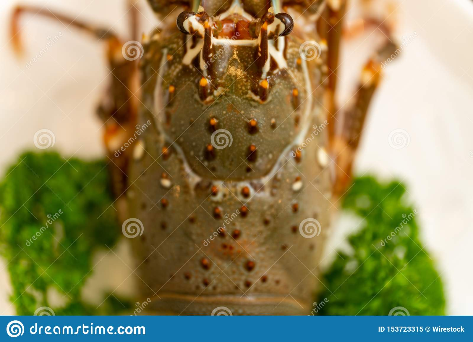 High angle closeup shot of lobster with parsley on a white plate