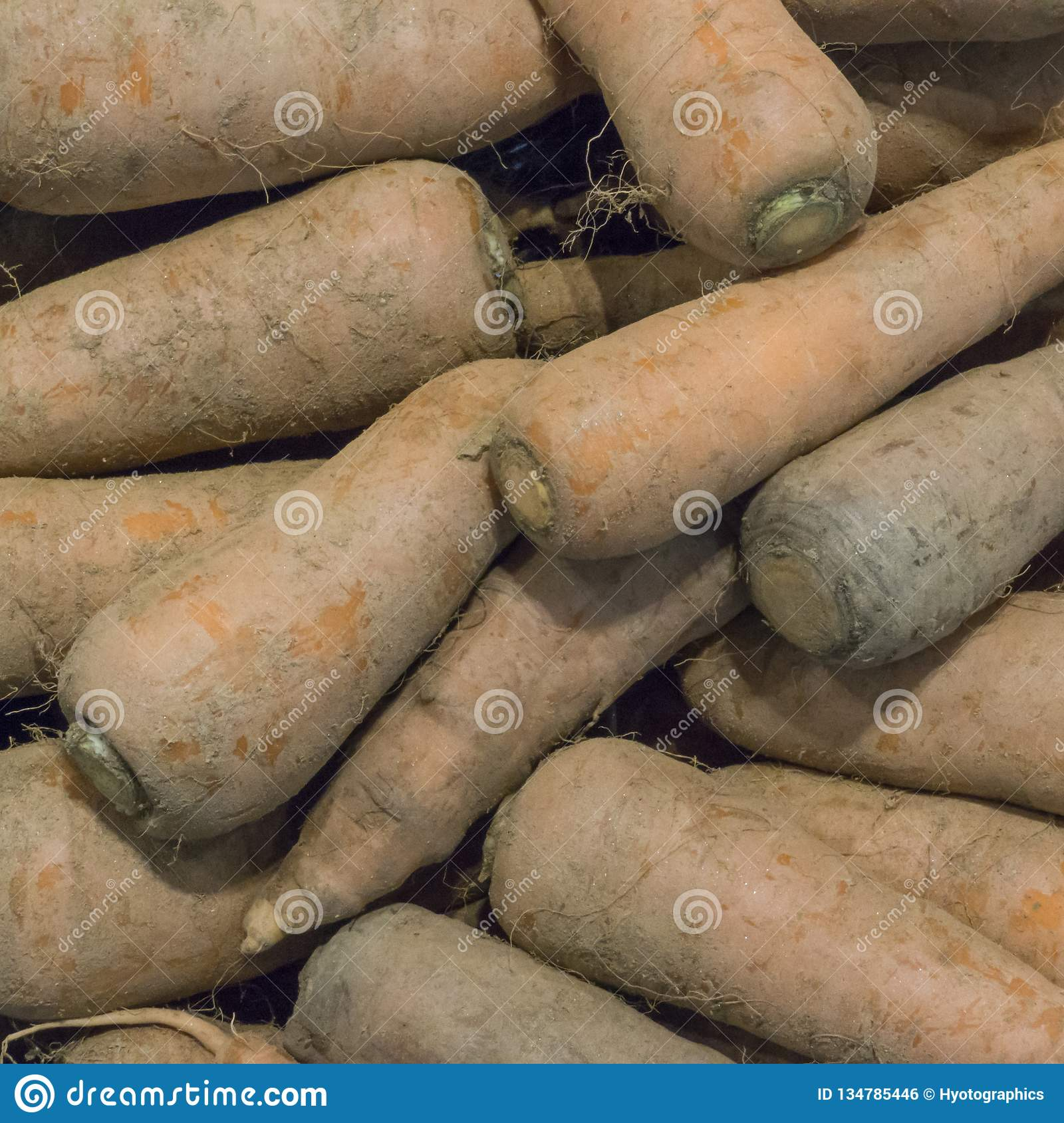 High angle view of dusty carrots