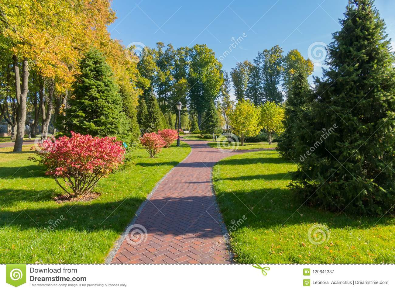 High Coniferous Trees And Beautiful Small Shrubs With Pink Flowers