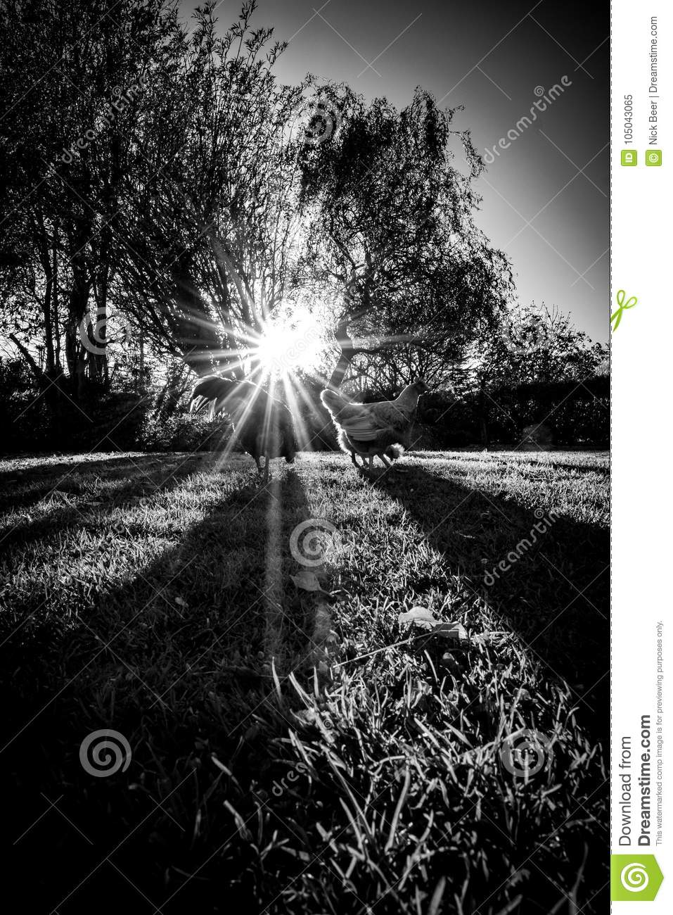 Sunrise From The Blind Royalty-Free Stock Image ...