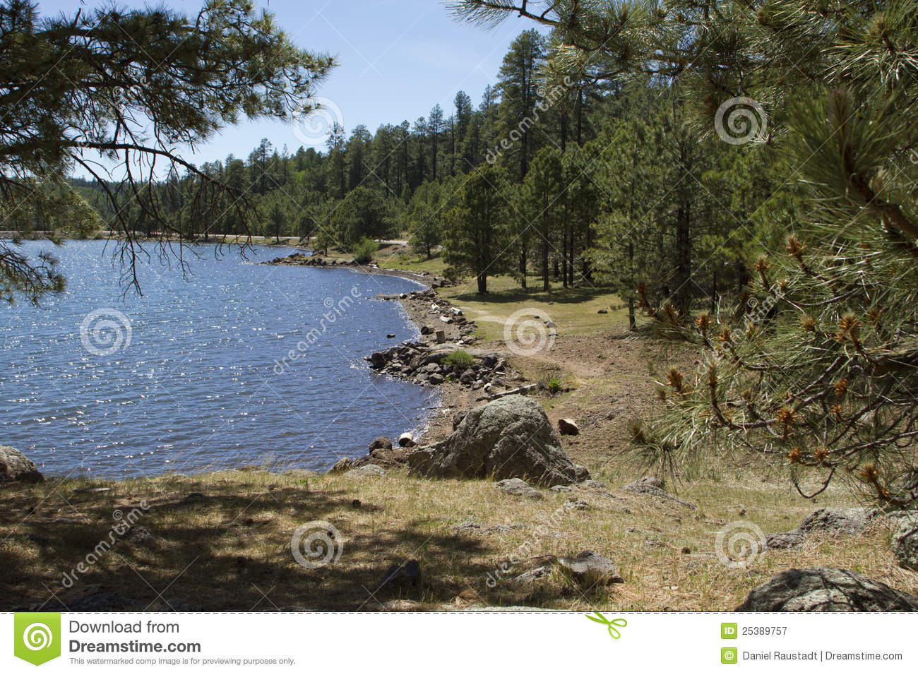 High Country Woods And Lake Of Arizona Royalty Free Stock ...