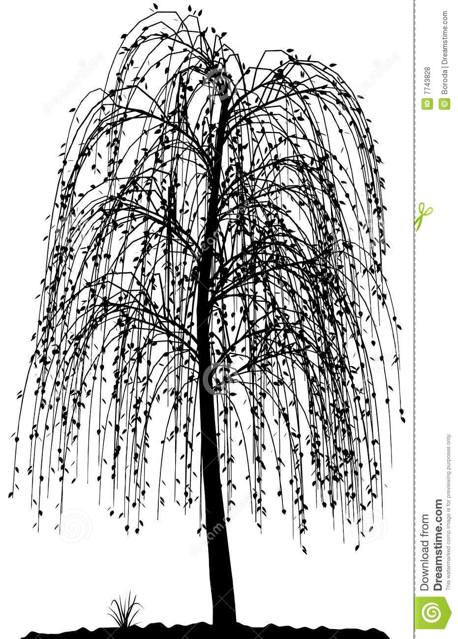 Cool Tree Black And White: High Detailed Tree Silhouette On White Background. Stock