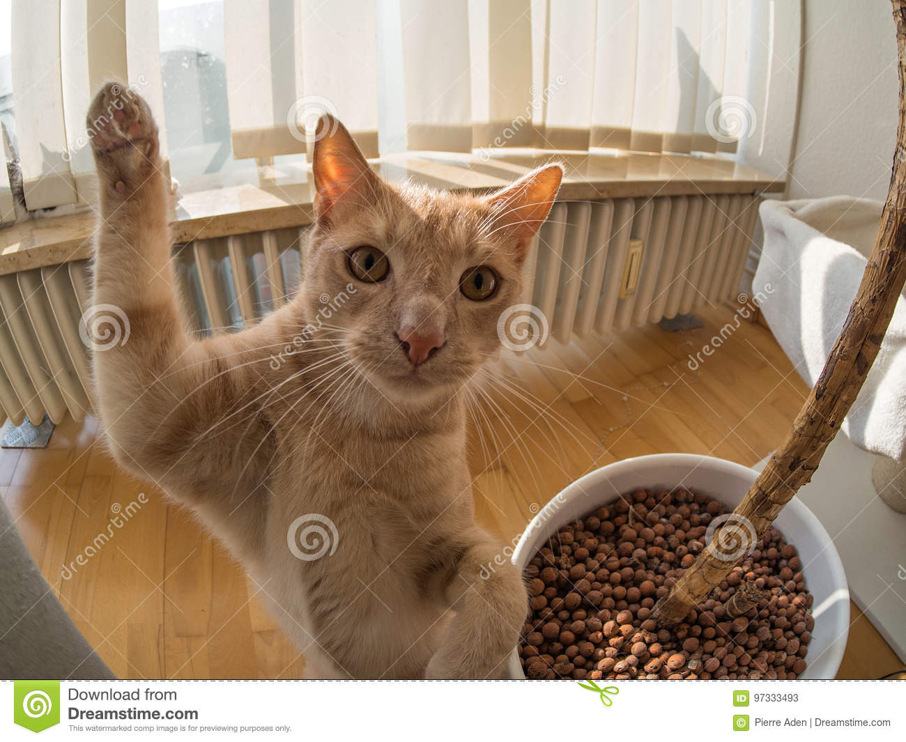 High five of a brown cat