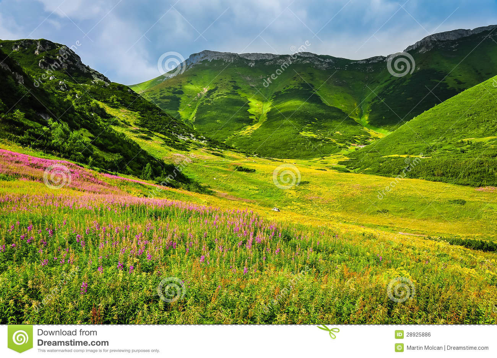 High tatras mountain green meadow with wild flowers