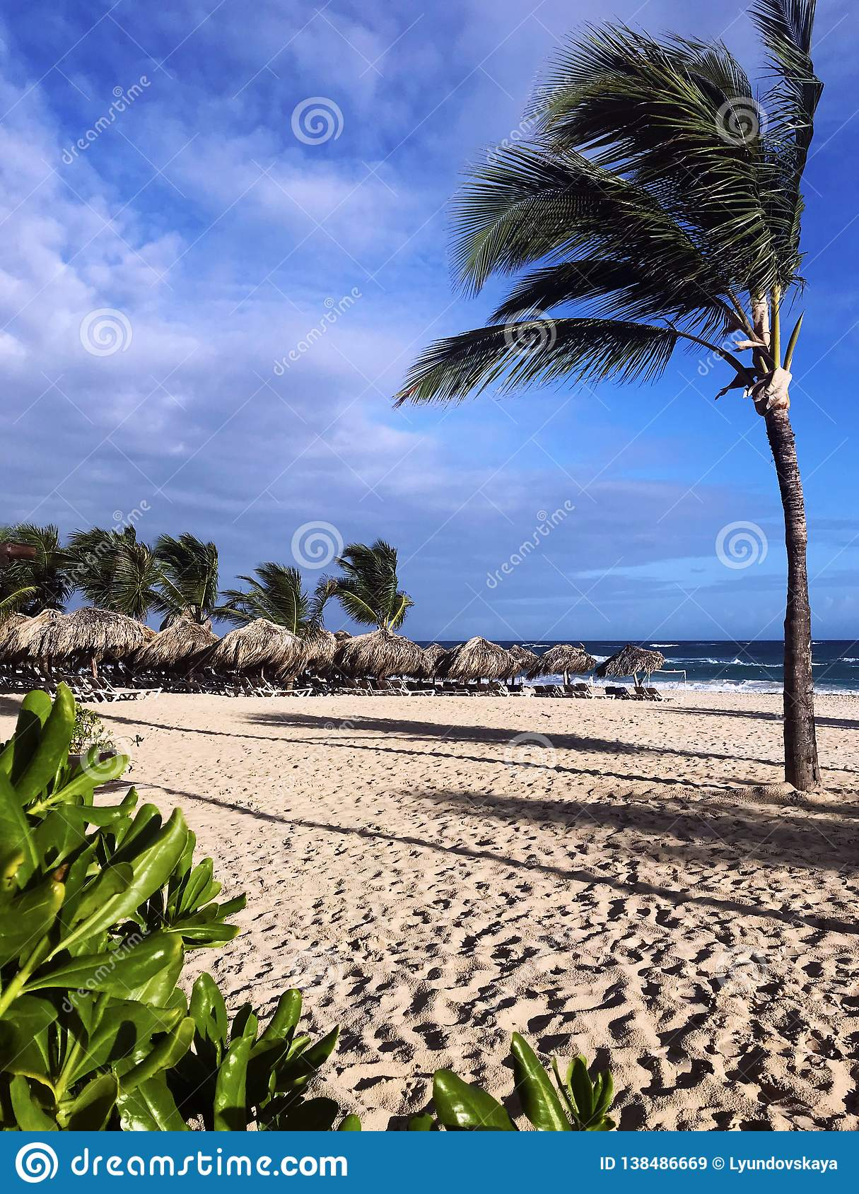 High thin coconut palm tree bends under the wind on the beach from the sand. Beach, bungalow, sky, clouds