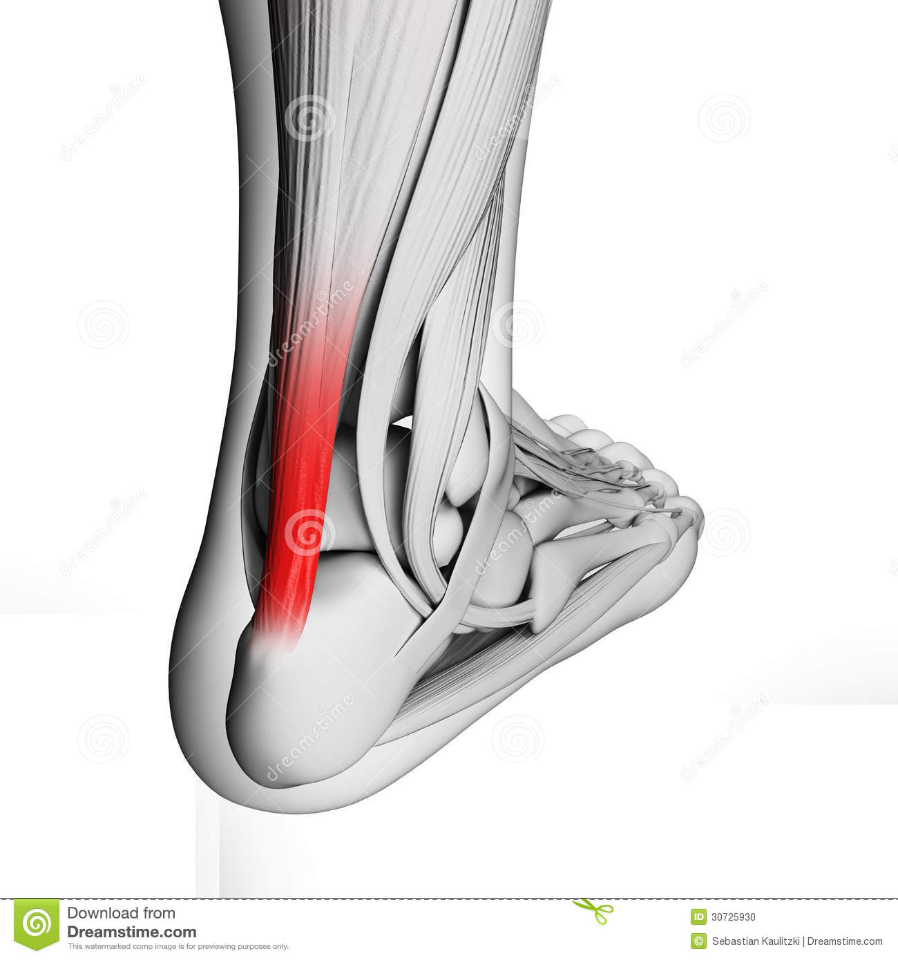 Highlighted achilles tendon