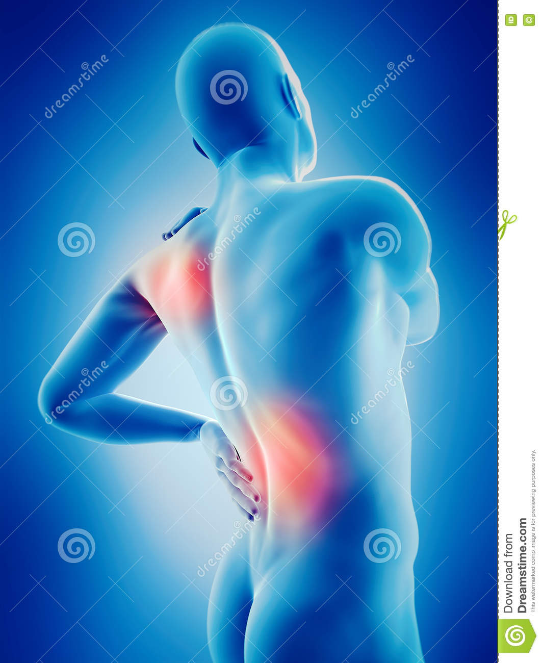 Highlighted Parts Of The Human Body Stock Illustration