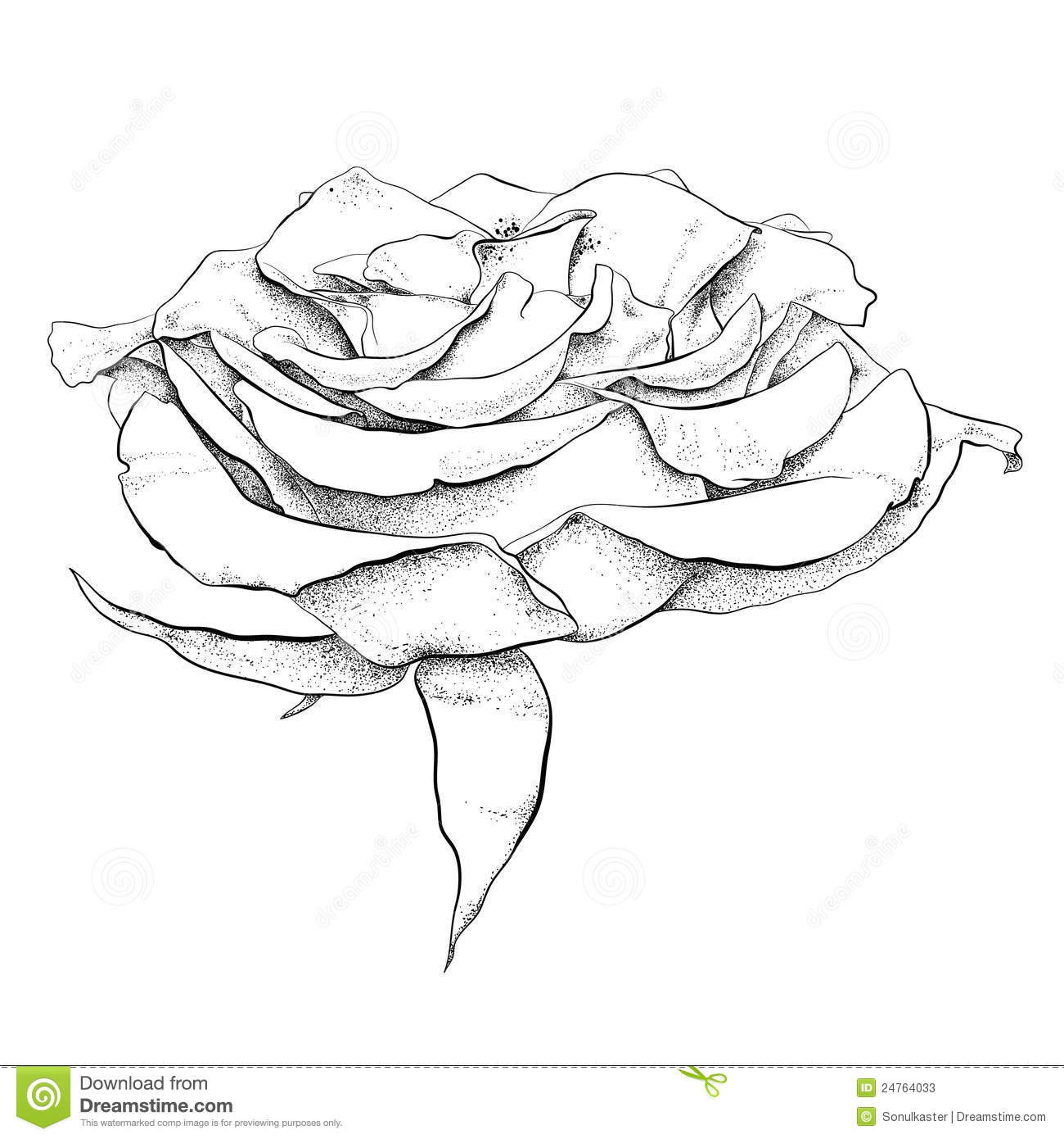 httpthumbsdreamstimecomzhighly detailed hand drawn rose