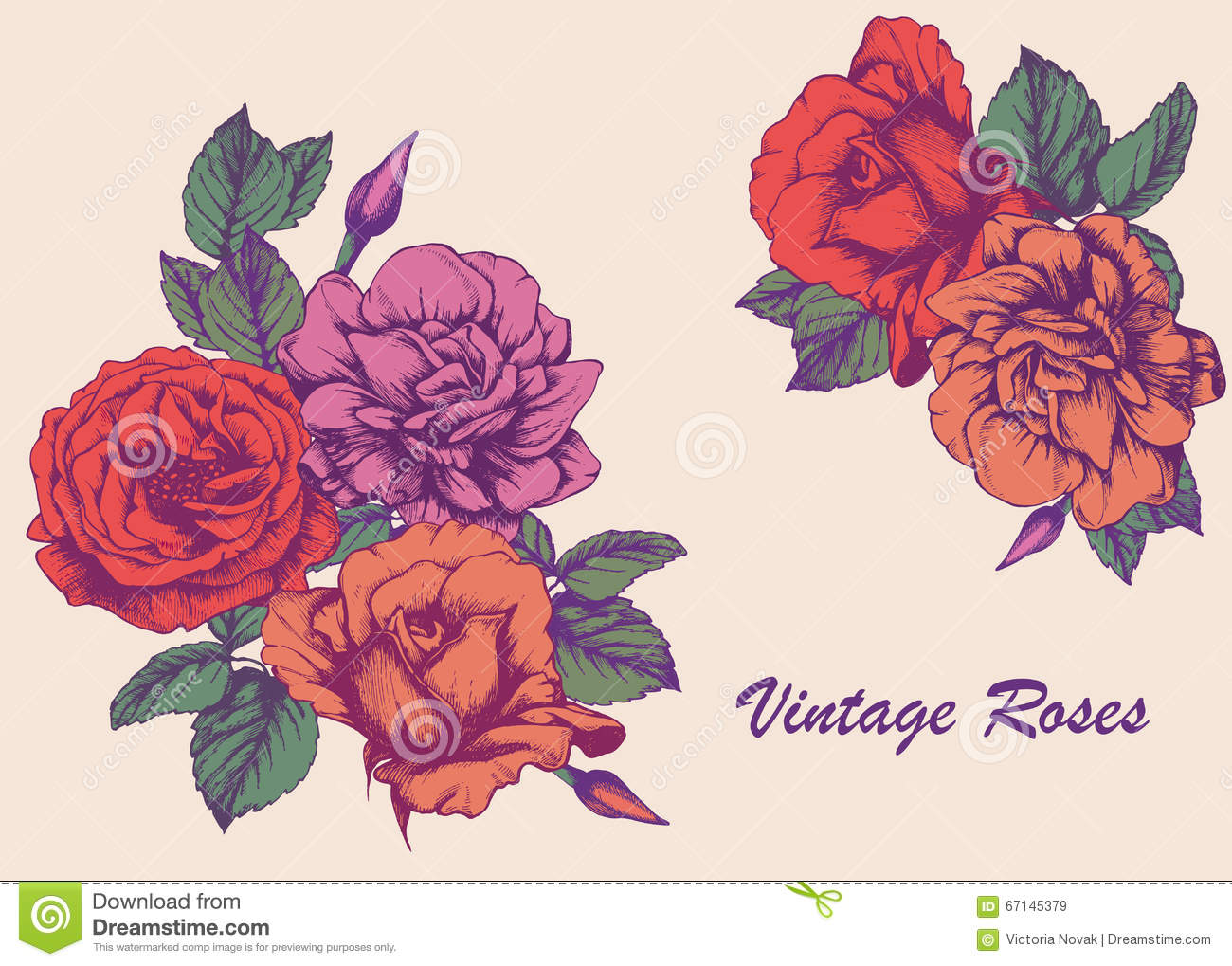 Highly Detailed Hand-drawn Roses. Stock Vector - Image: 67145379