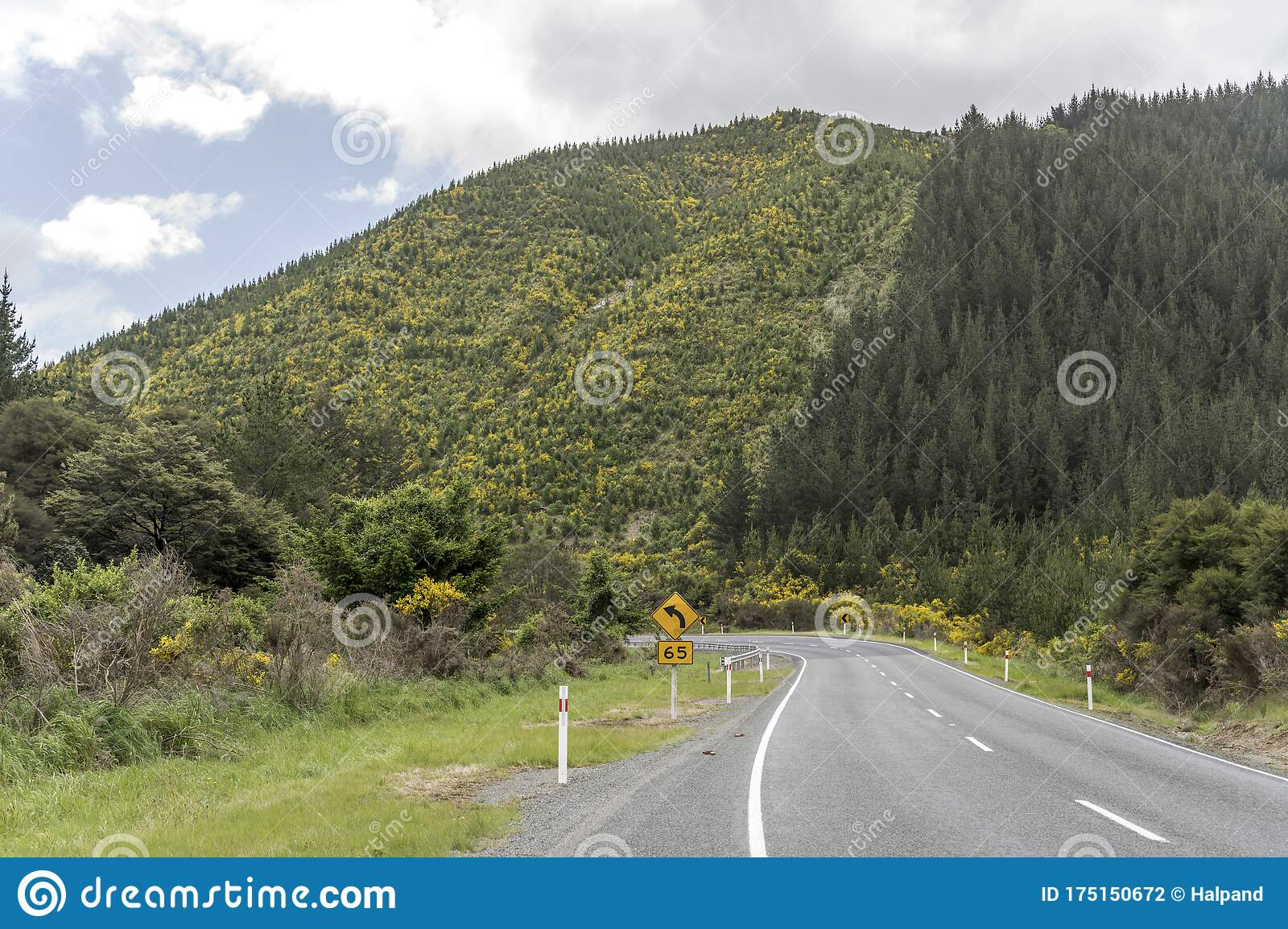 Highway Bending Under Slopes Covered With Blossoming Broom Shrubs In Hilly Green Countryside At Rai Valley Marlborough New Stock Photo Image Of Fields Slopes 175150672