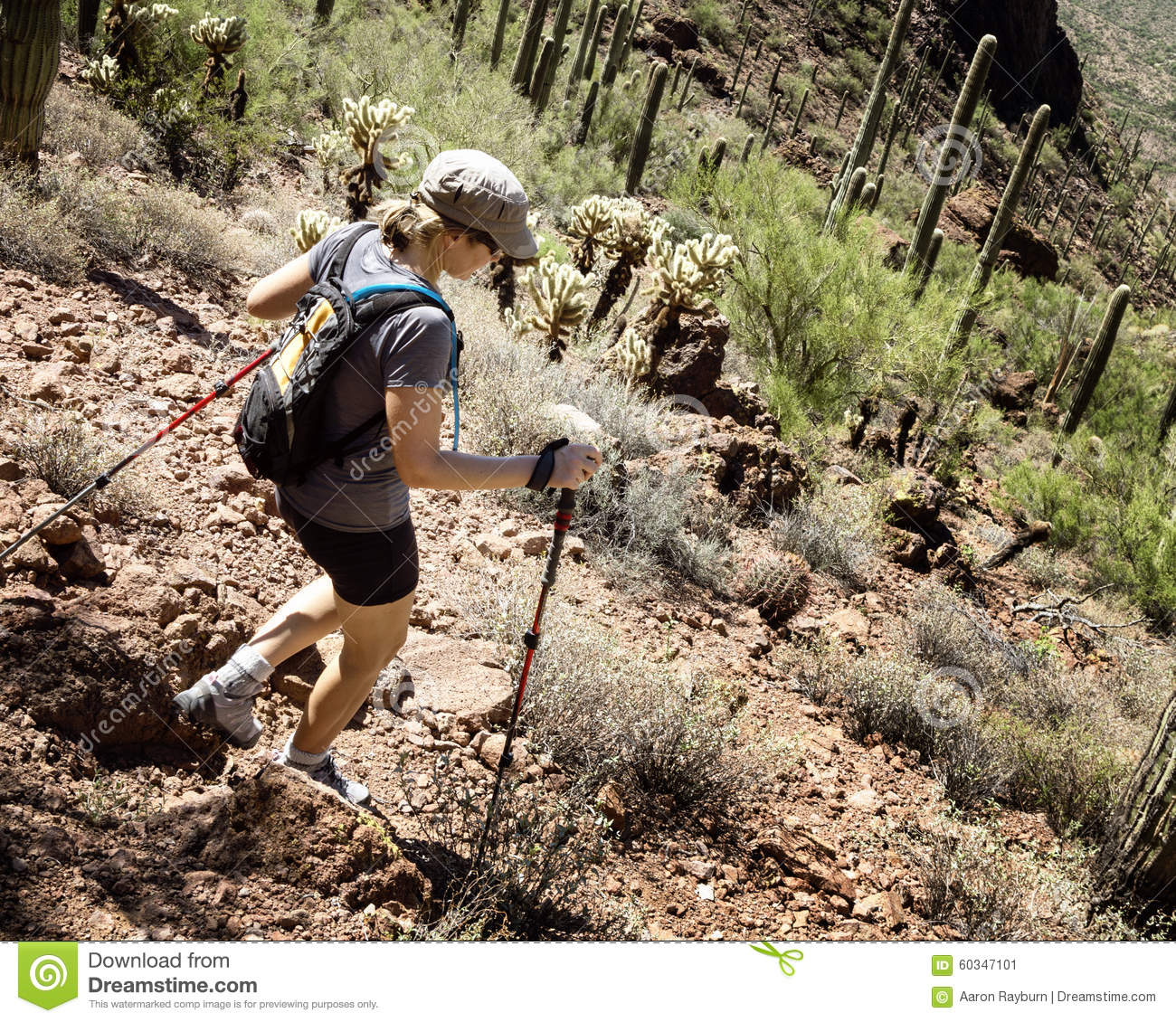 Hiker In Saguaro National Park Stock Photo Image 60347101