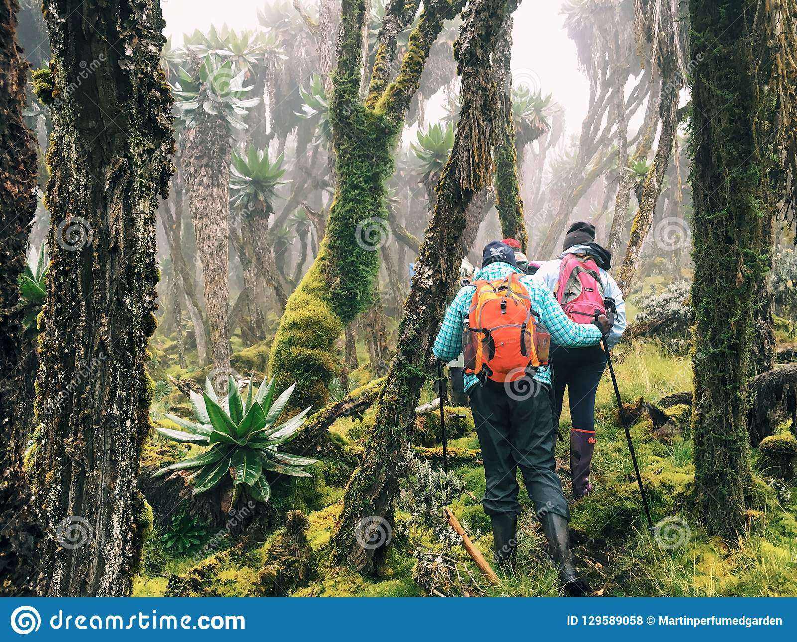 Hikers in the Rwenzori Mountains, Uganda