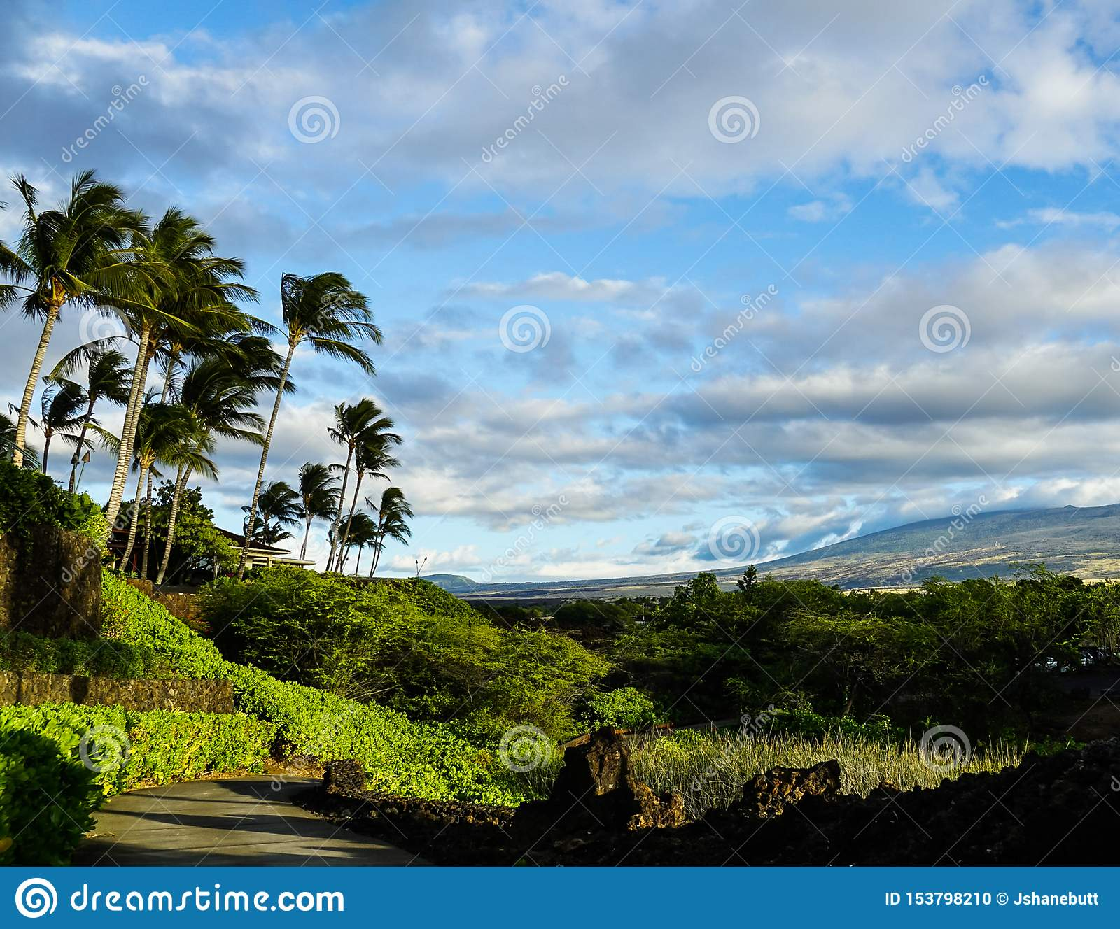 Hiking path with palm trees