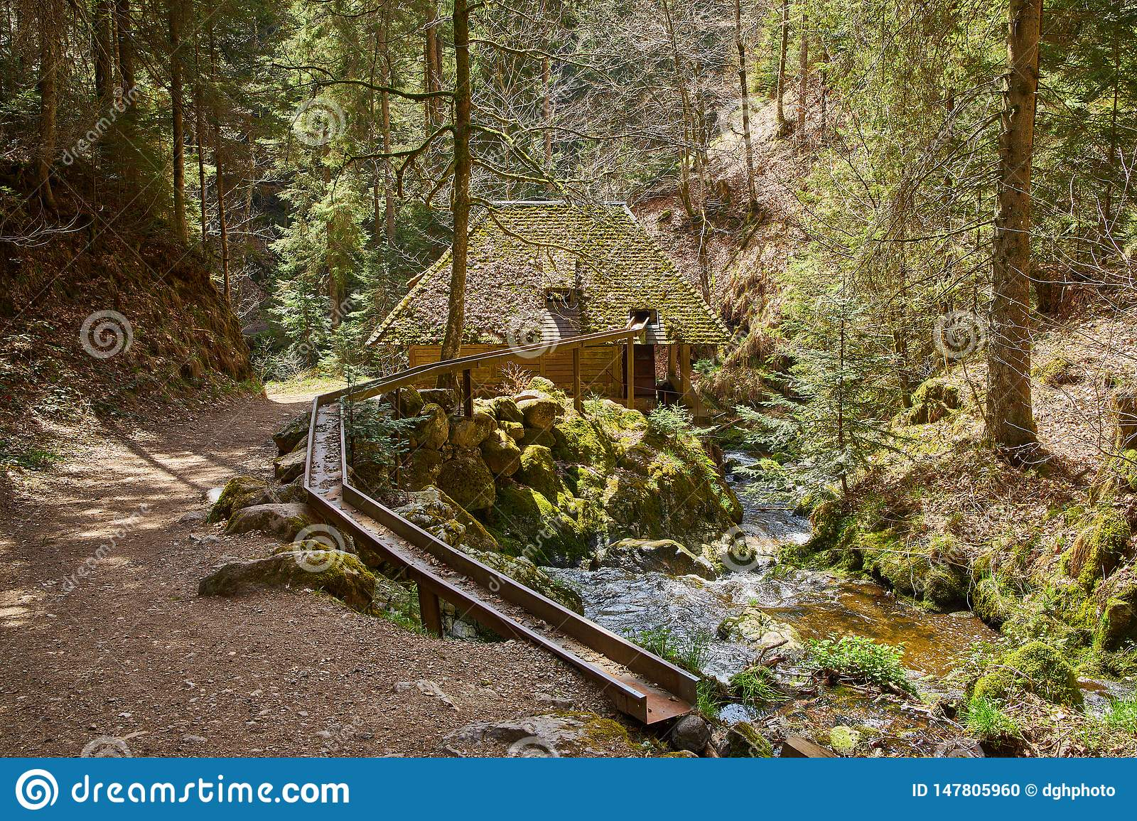 Hiking in the river ravenna canyon in the black forest in germany