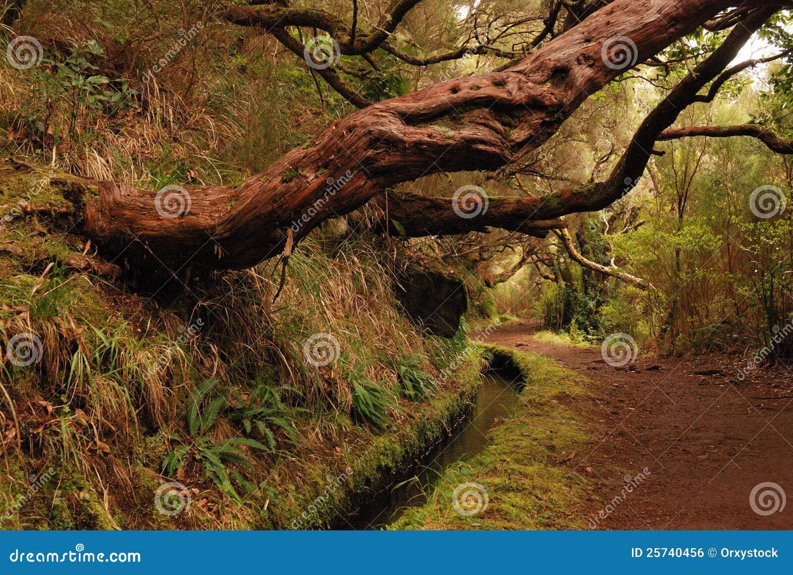 Hiking trail along levada on madeira