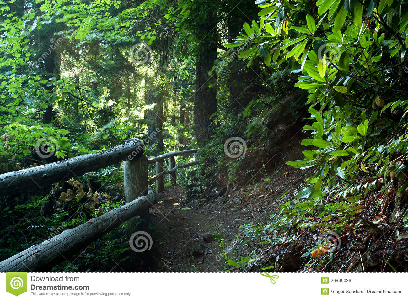 Hiking trail Path in Lush Forest