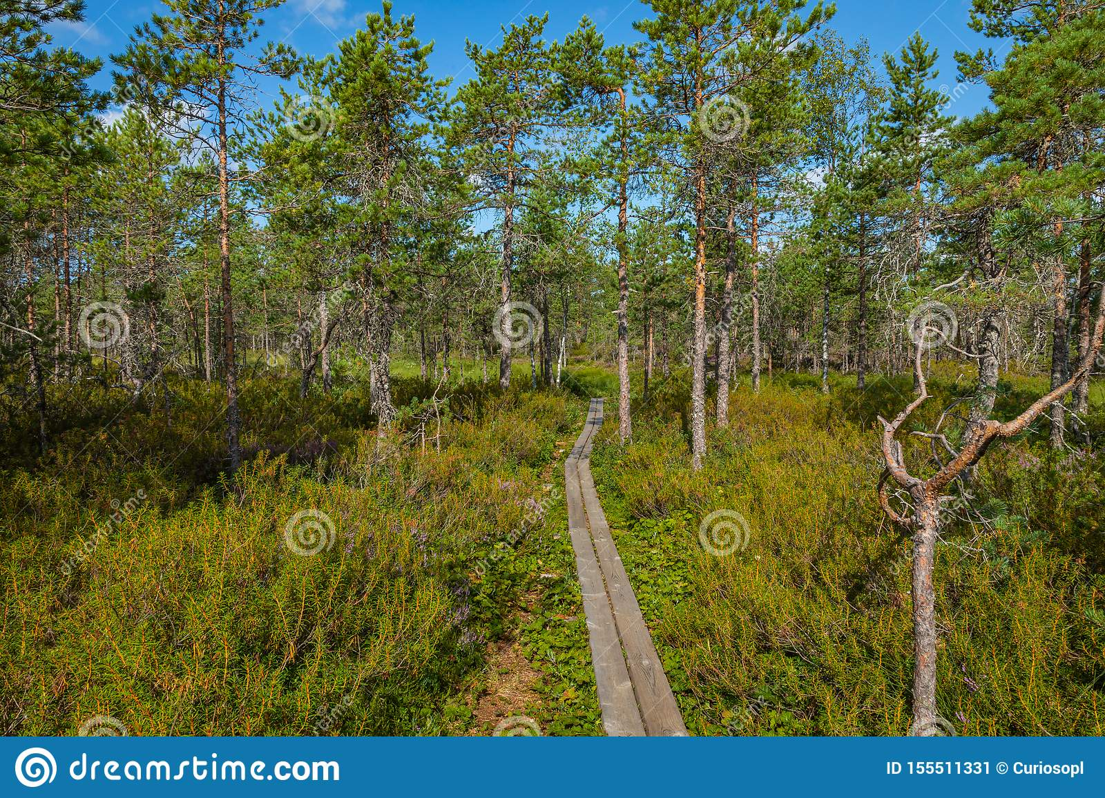 Hiking trail in scandinavian national park in a wetland bog. Kurjenrahka National Park. Turku, Finland. Nordic natural landscape