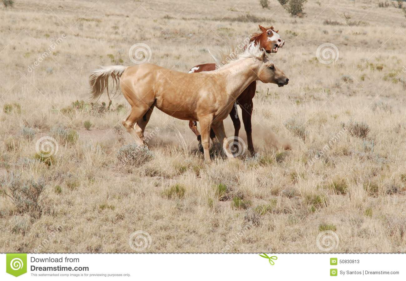 Hilarious Face Expression Funny Palomino Paint Horse Expression Stock Image Image Of Palomino Horses 50830813