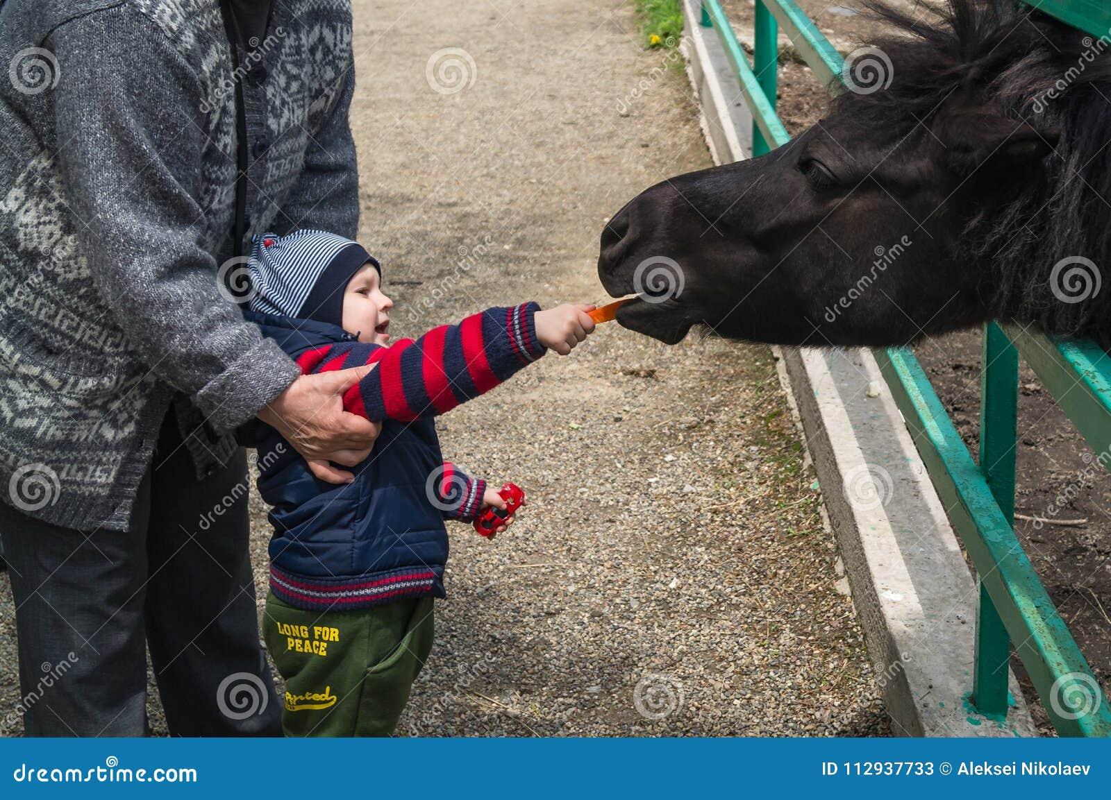 Hild geven de jongen en Zijn grootmoeder voedsel voor klein en jong Przewalski-paard