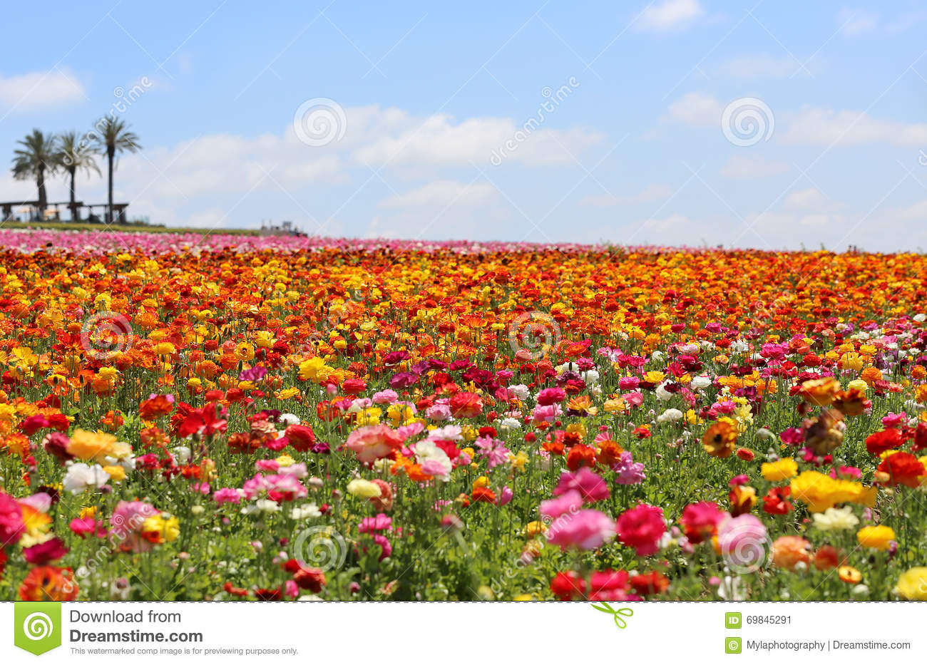 Hill Top Spring Flowers Stock Image Image Of Bokeh Beautiful