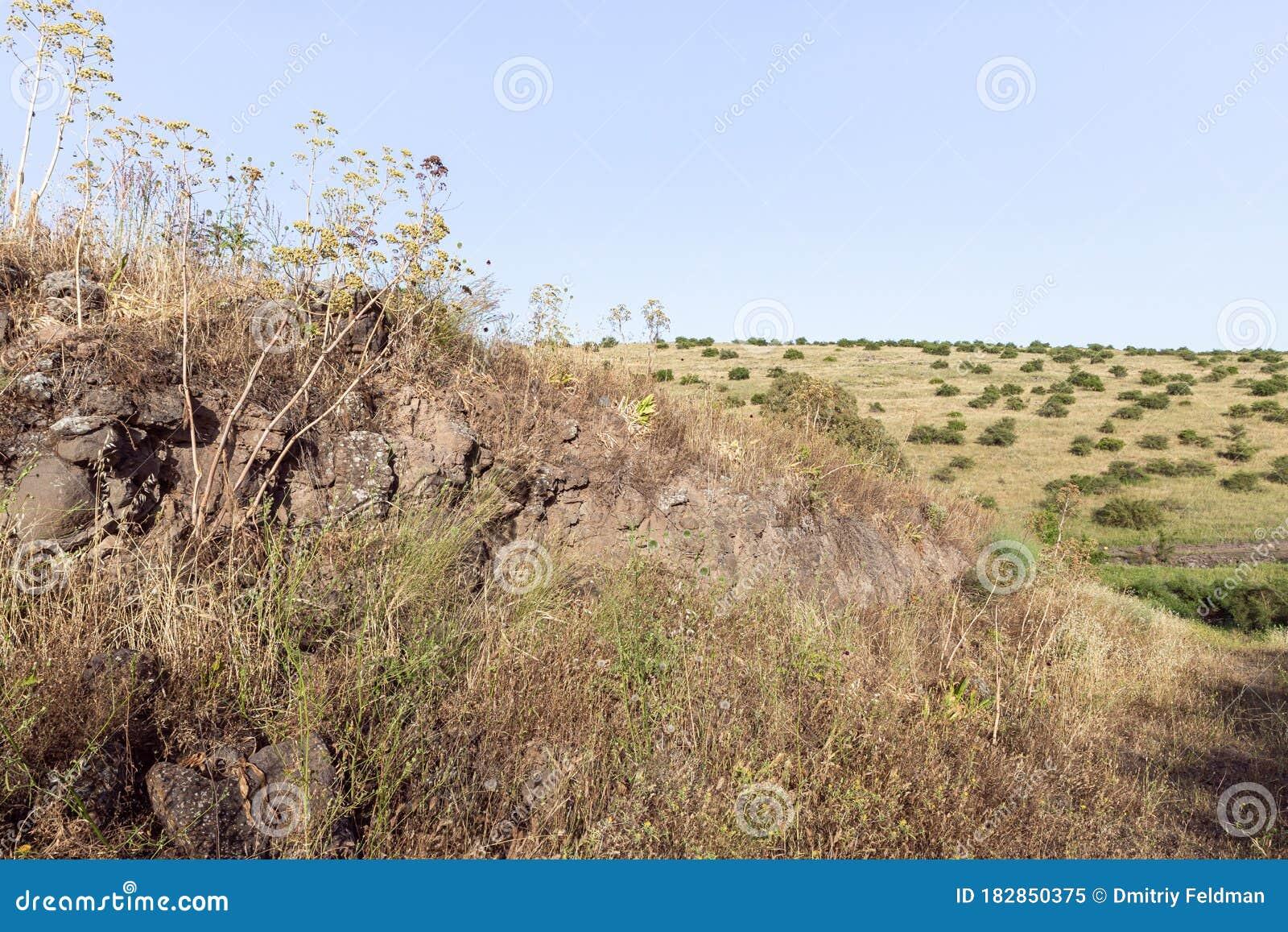 Grass Israel