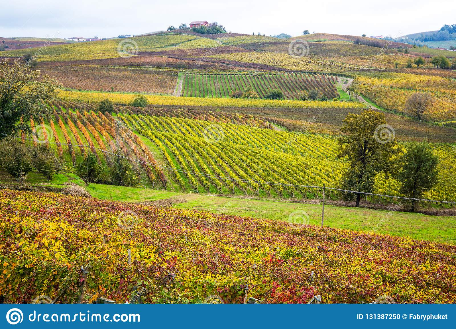 Hills Of Vineyards In Autumn In Piedmont, Italy Stock Photo - Image