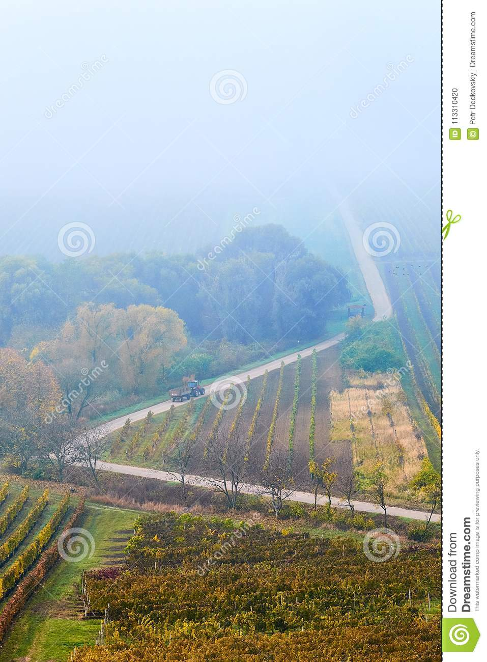 Hills with vineyards and the road disappearing into the fog . Countryside with vineyard and fields with patterns on hills. South