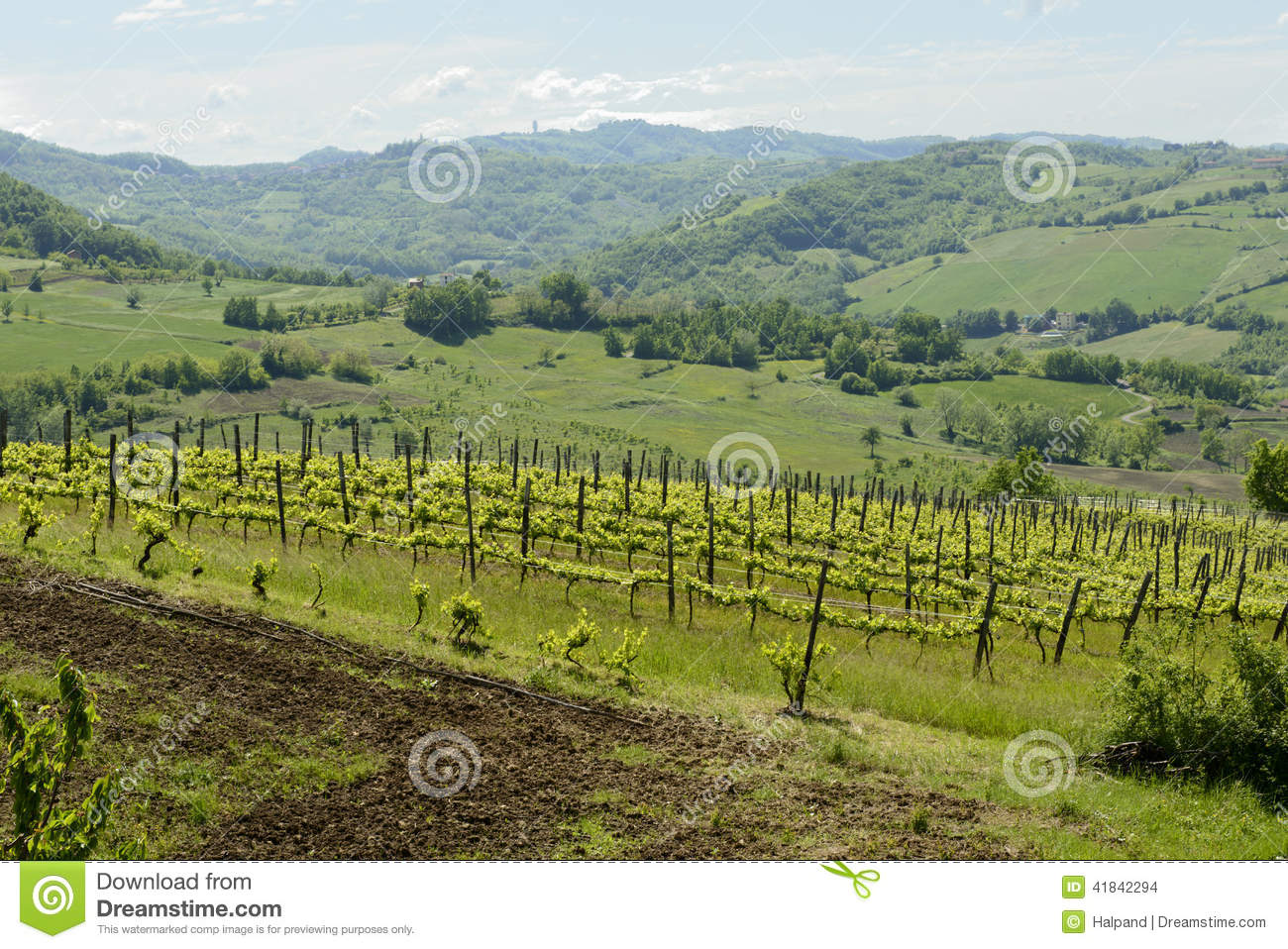 Hilly vineyard in Curone valley, Piedmont, Italy