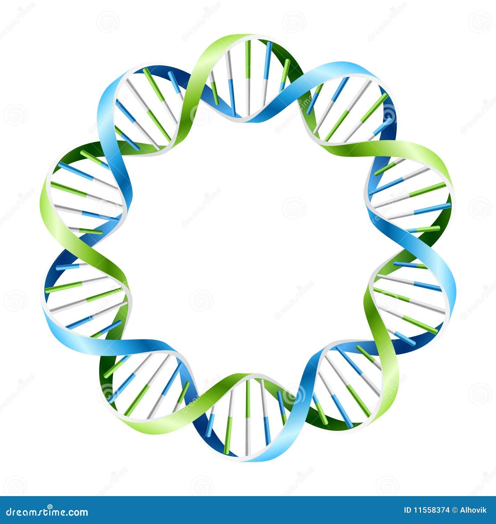 Hilos de la DNA en círculo. Vector.