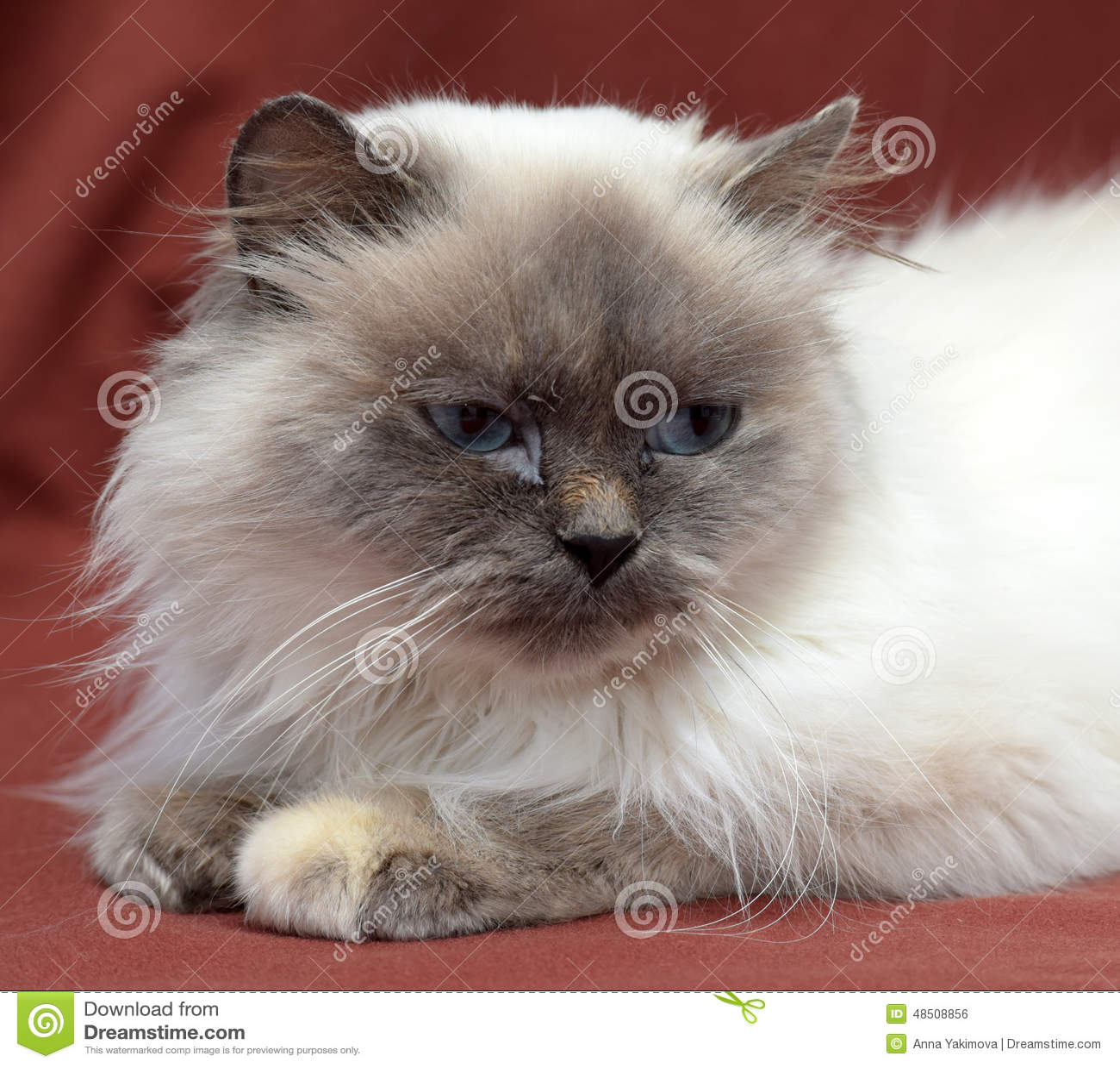 diy cat bed no sew