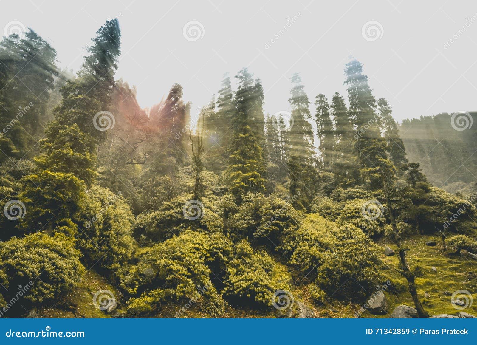 Himalayan skog med solstrålar