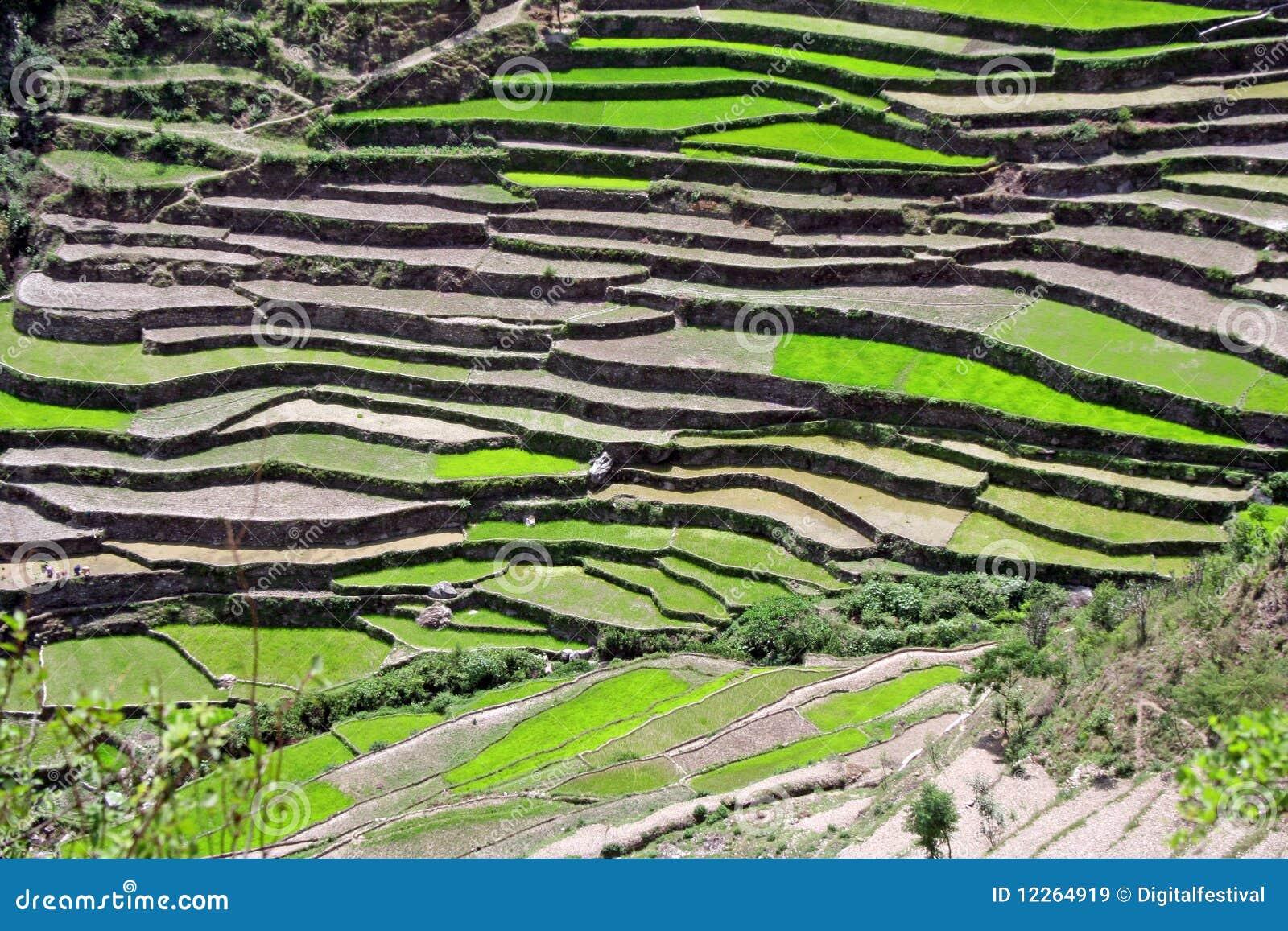 Himalayan steppe paddy farming uttaranchal india royalty for Terrace farming model