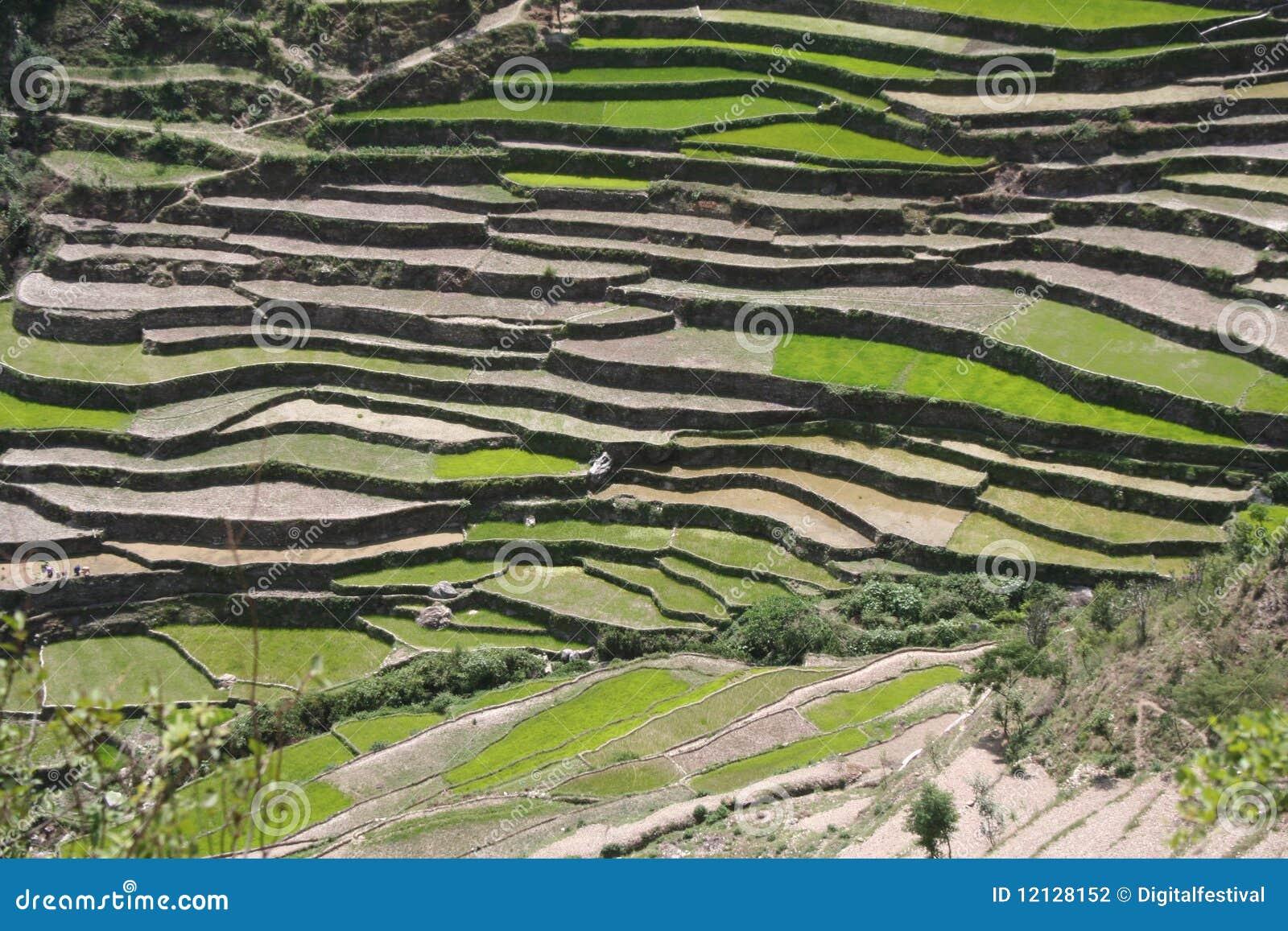 Himalayan steppe terrace farming uttaranchal india stock for Terrace farming images