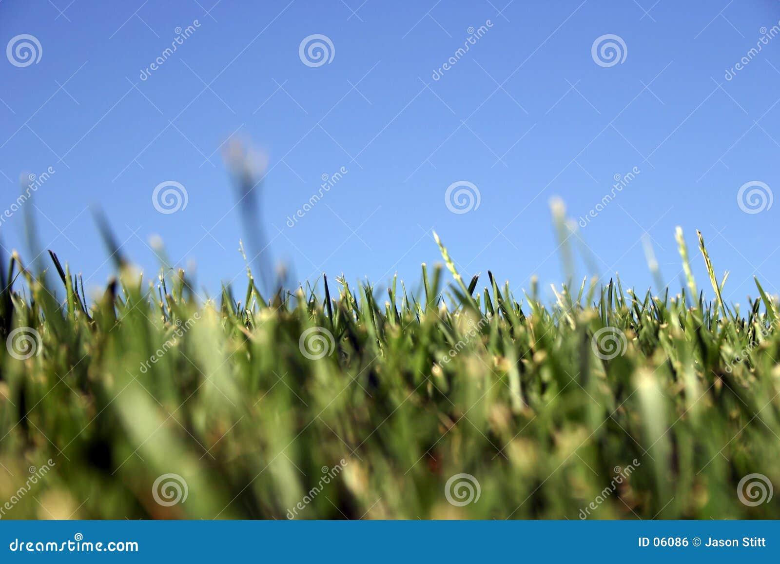 Himmel-Gras