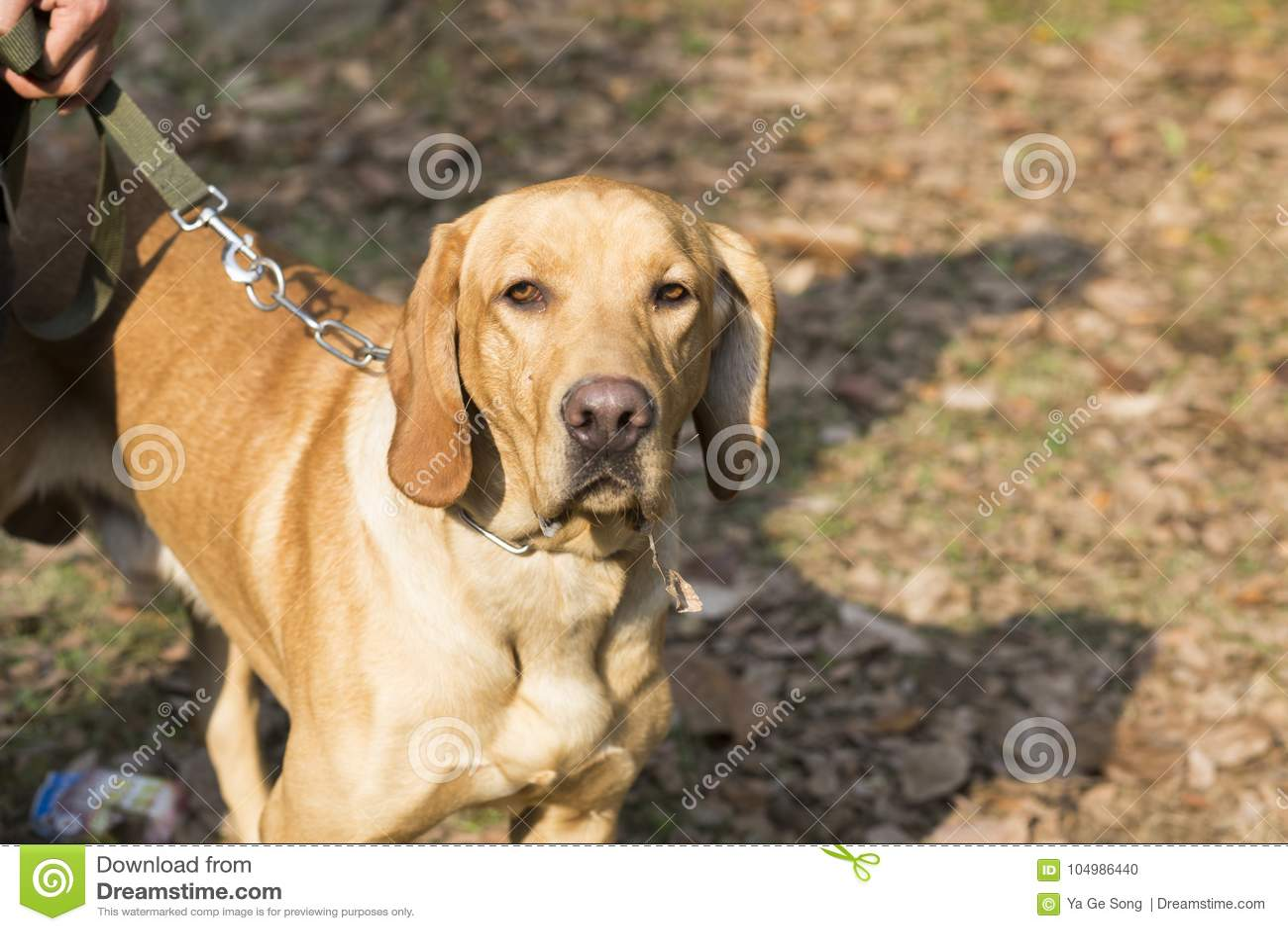 Hintere Ansicht eines Welpenhundes auf einem grauen Hintergrund
