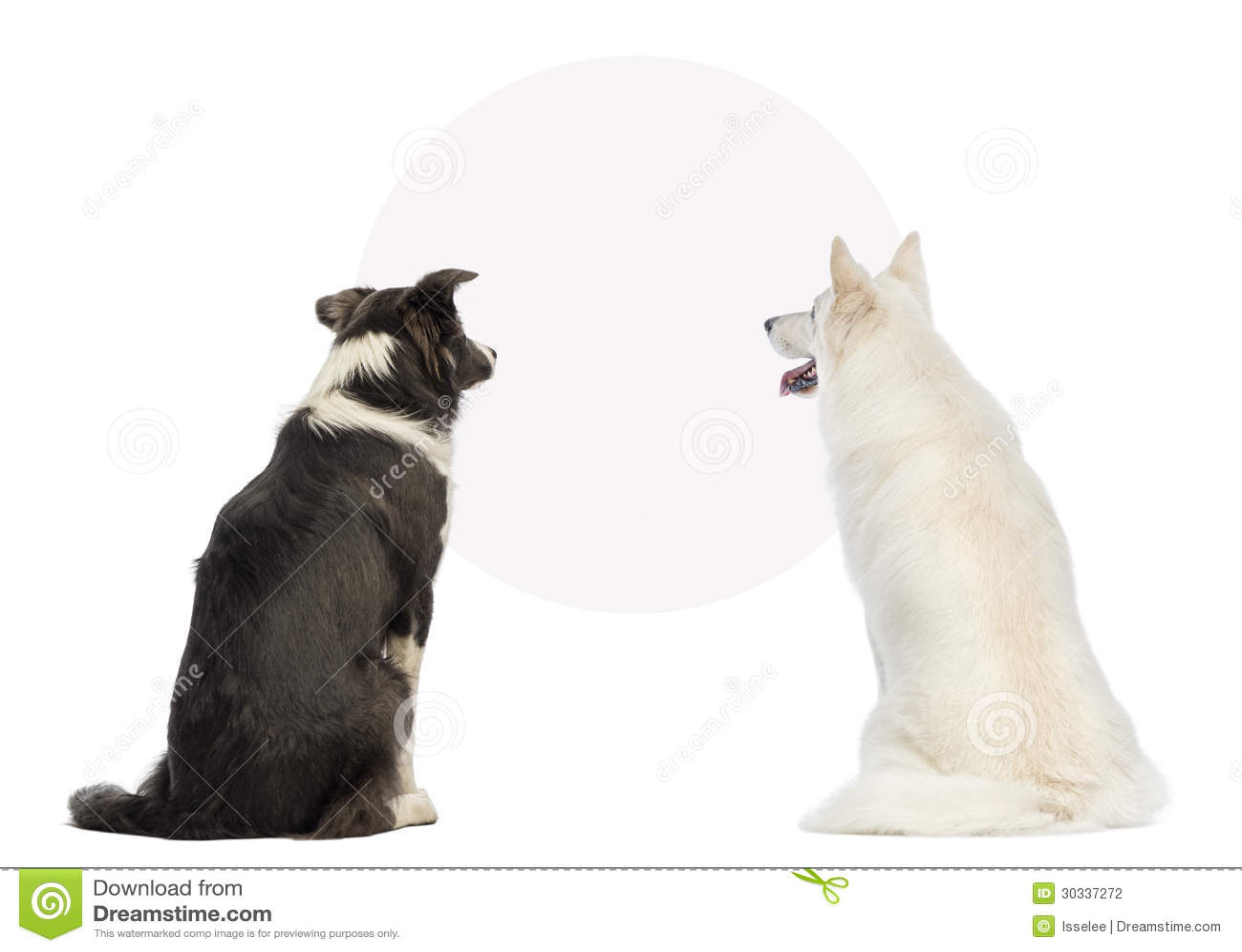 Hintere Ansicht von zwei Hunden, die ein leeres Zeichen betrachten