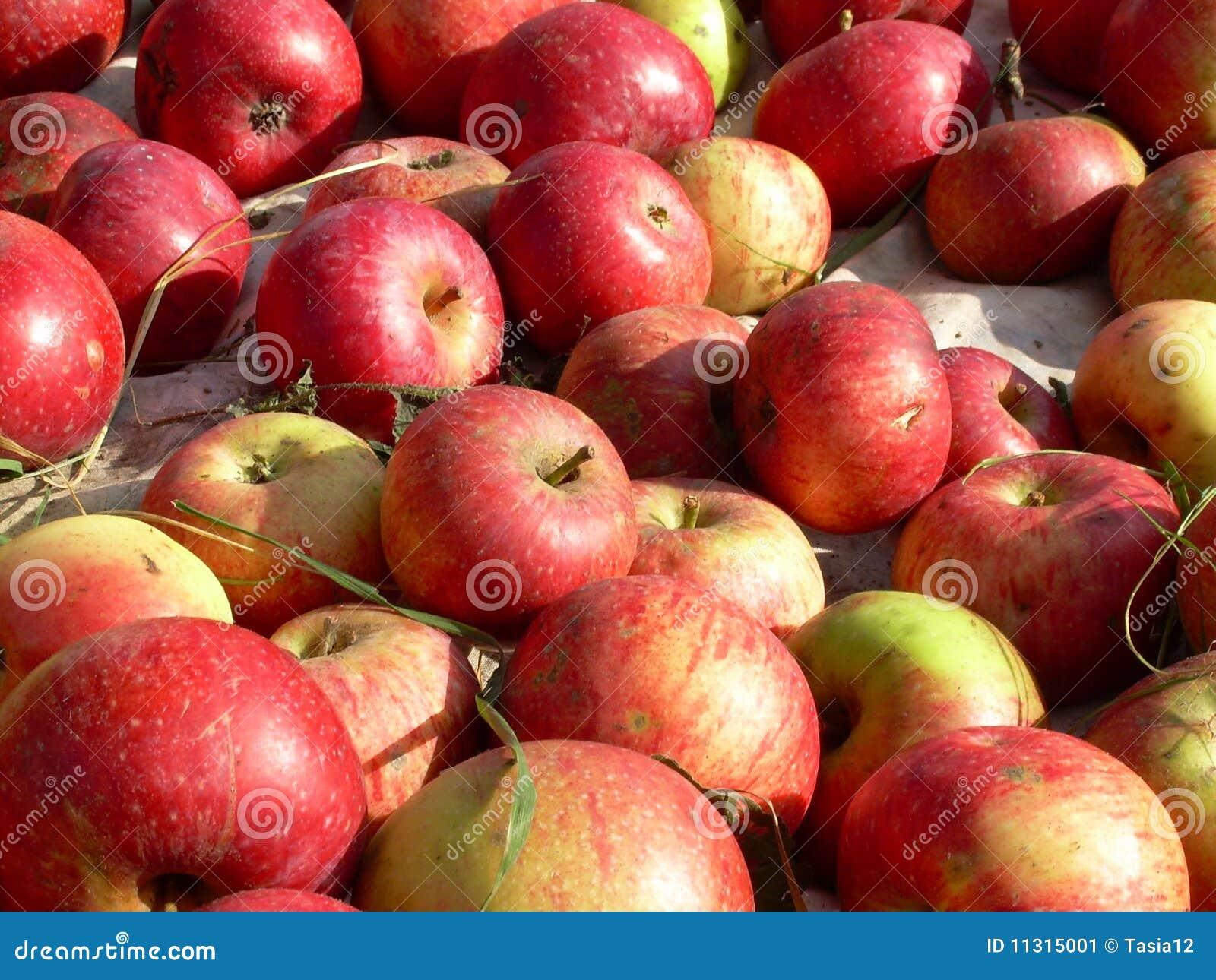 Hintergrund der Äpfel