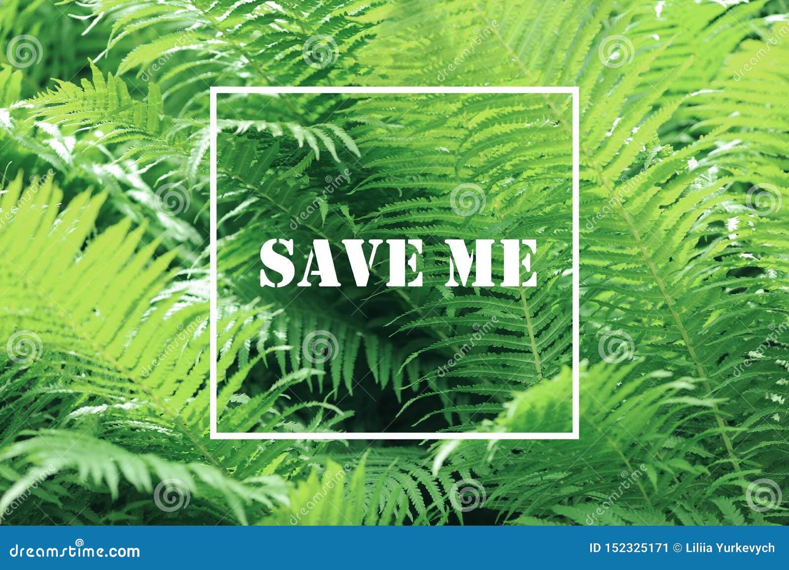 Hintergrund des grünen Grases mit weißem quadratischem Rahmen