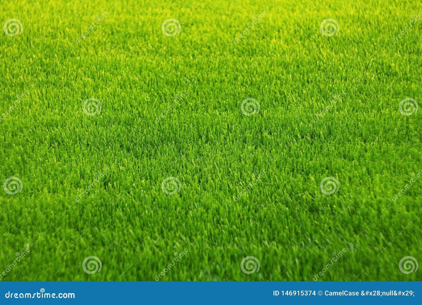 Hintergrund des gr?nen Grases Überraschende Grasbeschaffenheit Gr?ner Hintergrund Parkrasenbeschaffenheit