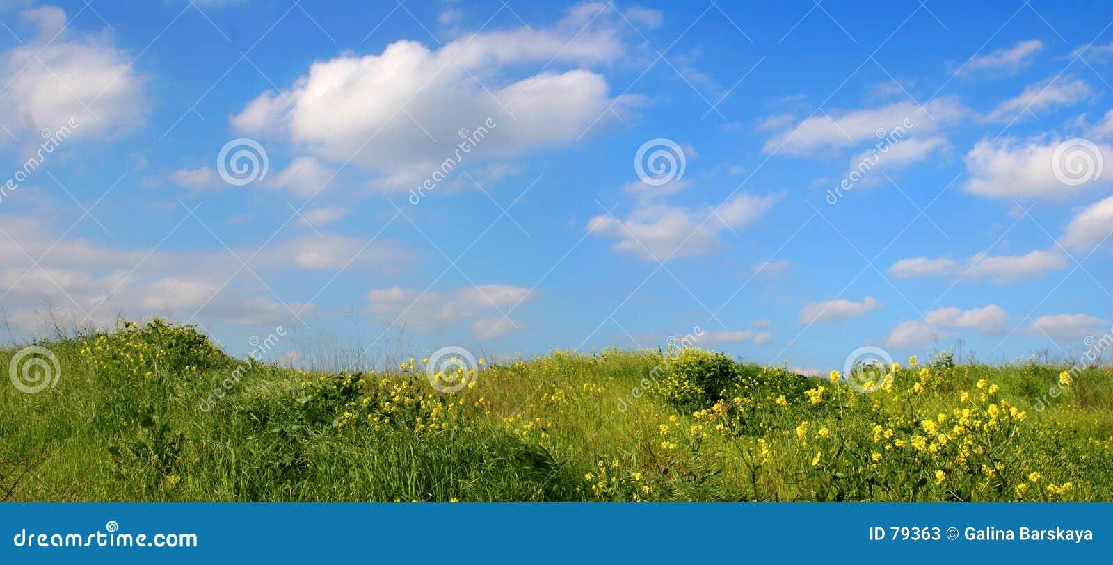 Hintergrund des Himmels und des Grases