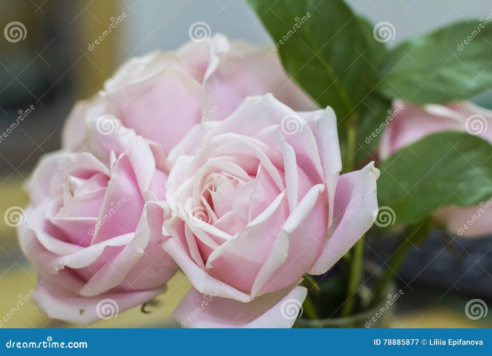 hintergrund drei rosa und wei e rosen in einem blumenstrau der blume stockbild bild von. Black Bedroom Furniture Sets. Home Design Ideas