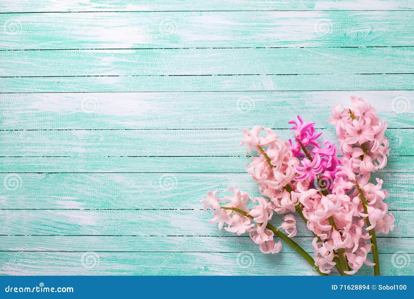 Hintergrund mit frischen rosa Blumenhyazinthen auf Türkisfarbe